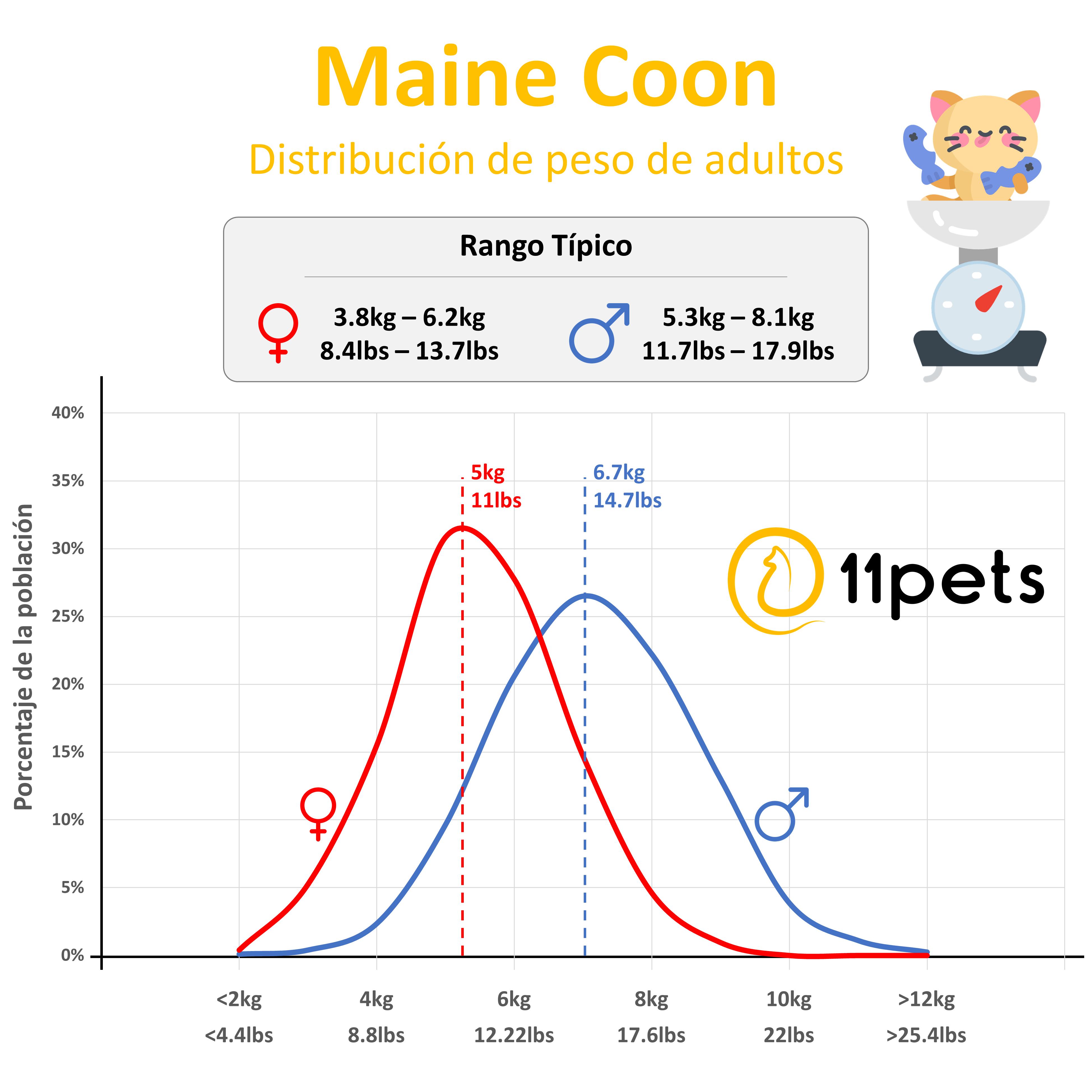 peso tipico gatos Maine Coon