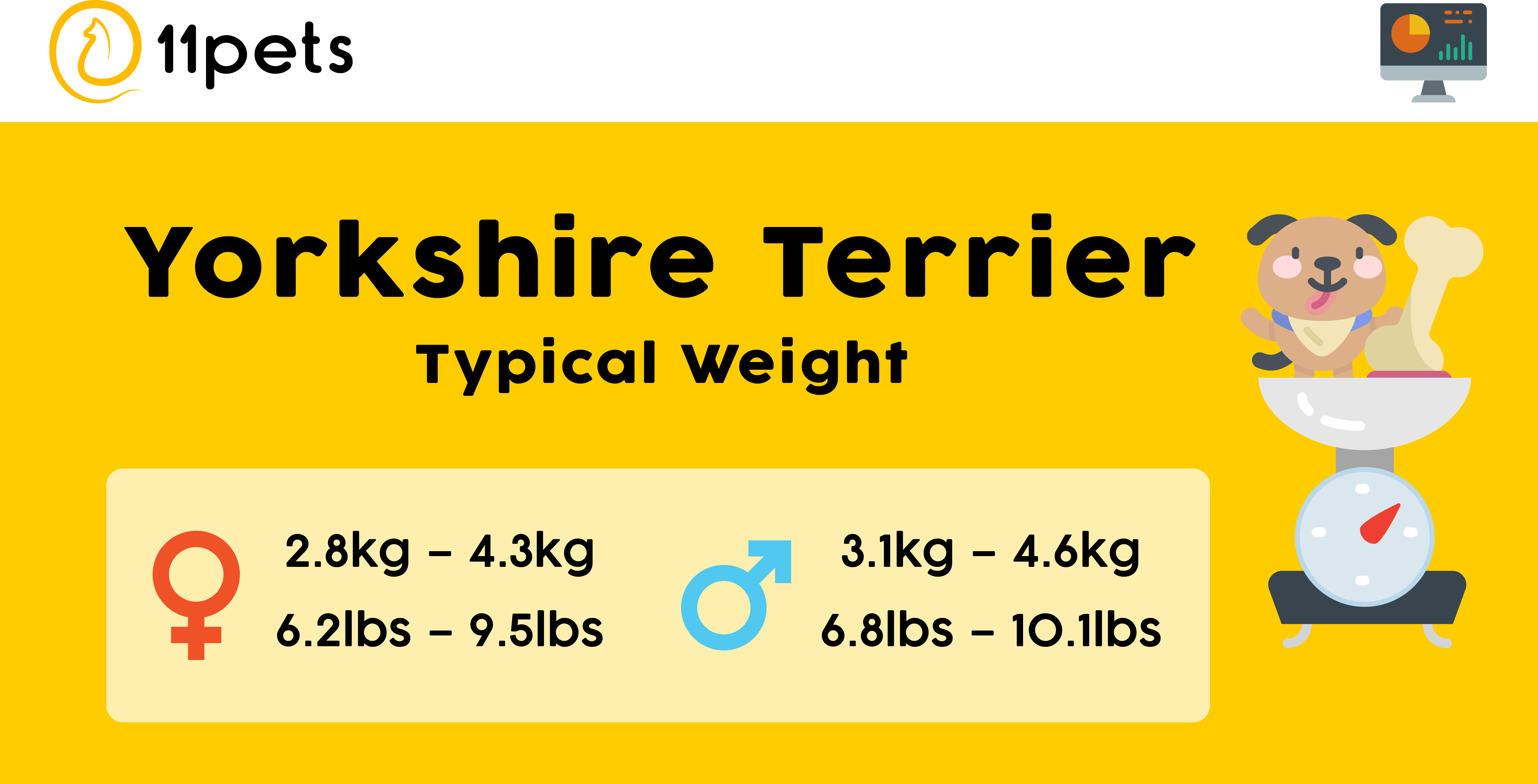 Typical weight for Yorkshire Terriers