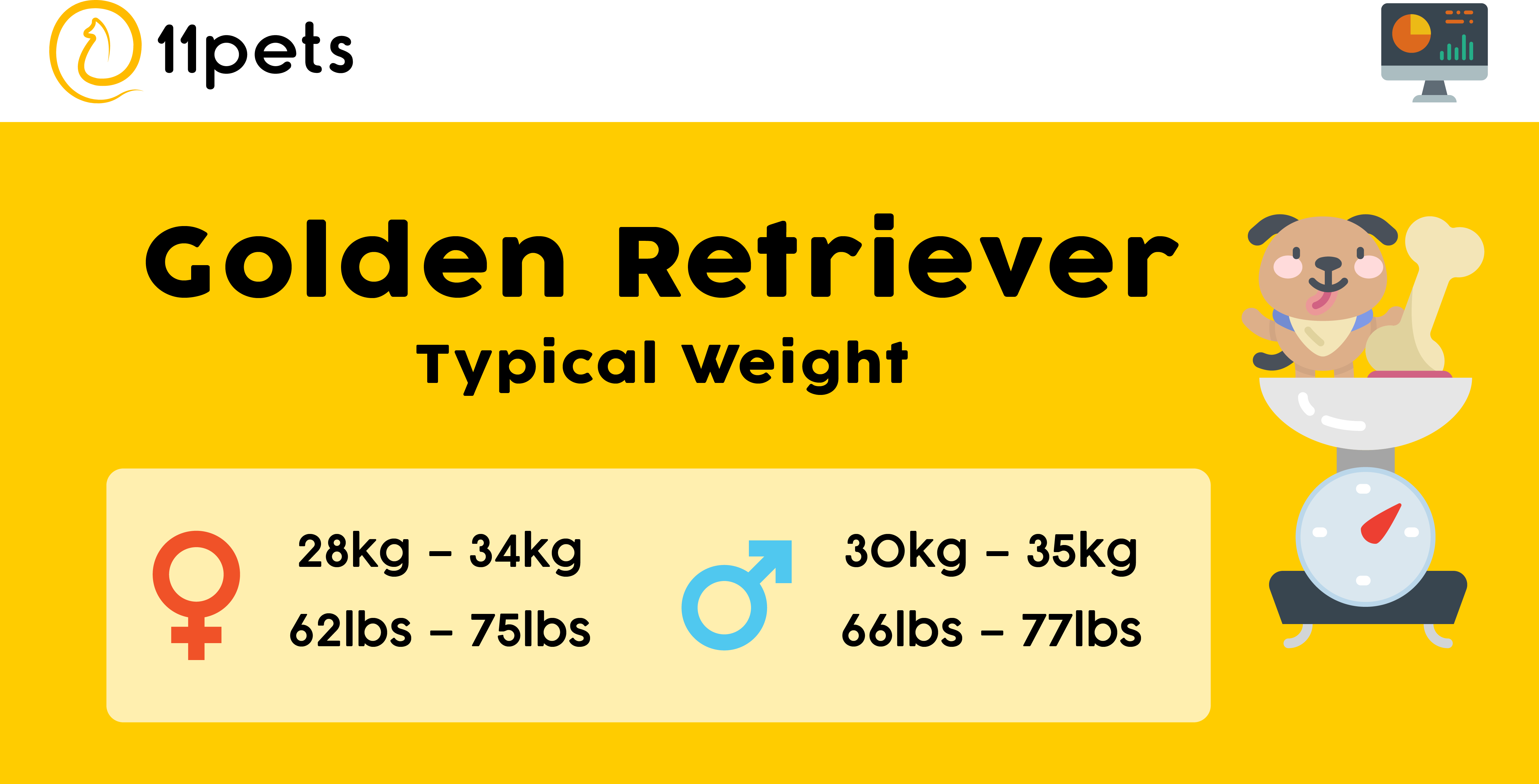 Typical weight for Golden Retriever dogs