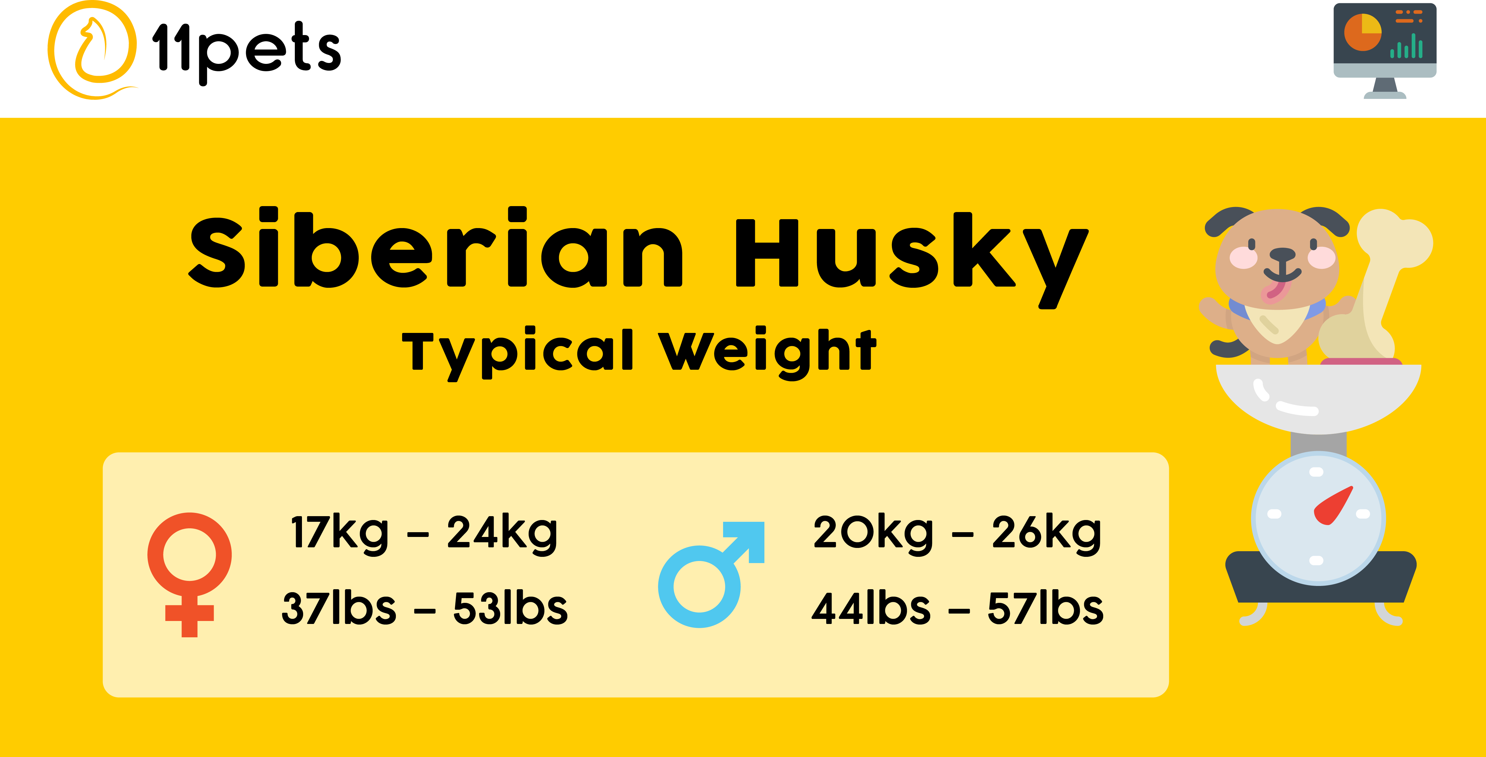 Typical weight for Siberian Husky dogs