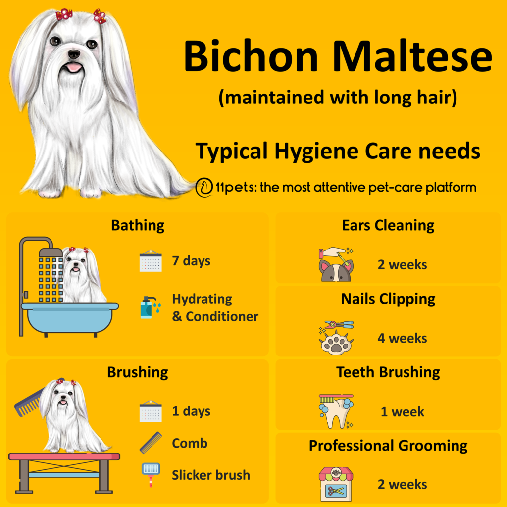Hygiene Care Guide for Bichon Maltese dogs