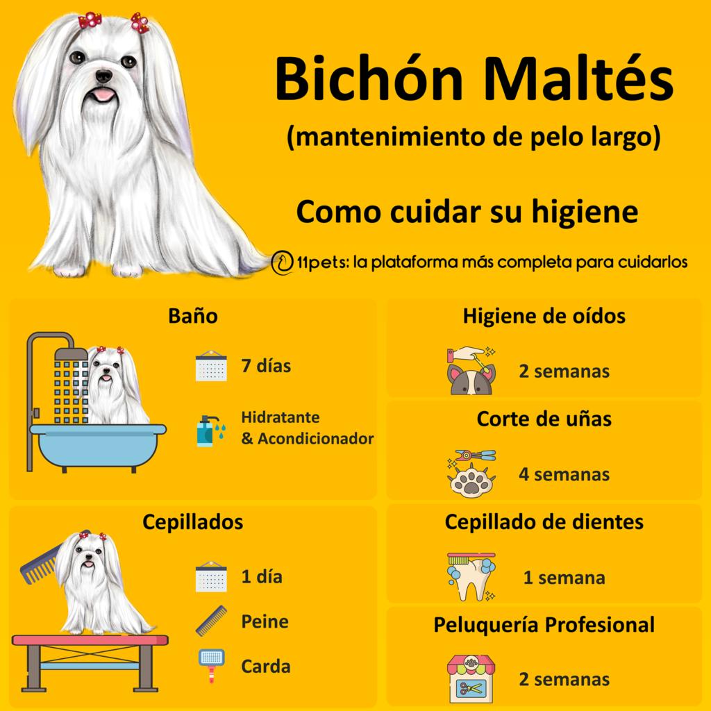 Guía de cuidados para la higiene de tu Bichón Maltés