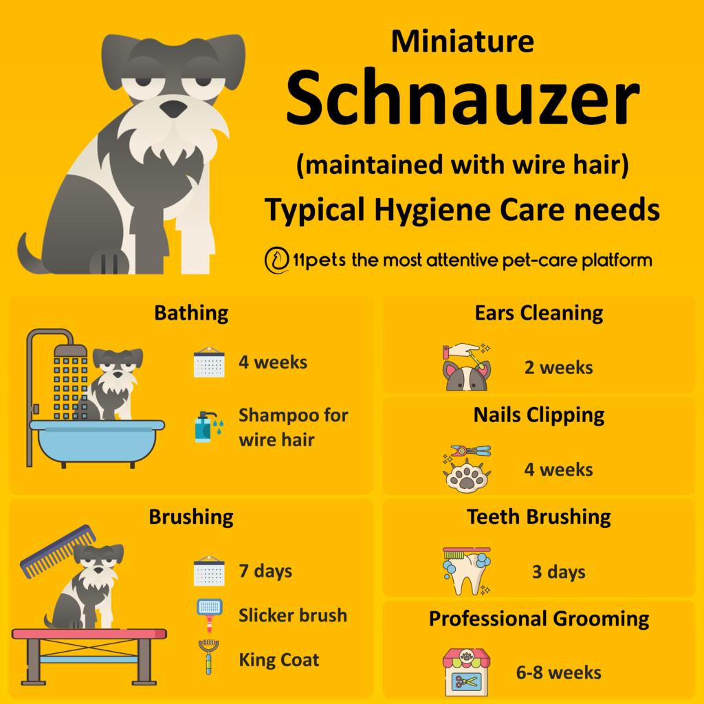 Hygiene Care Guide for Miniature Schnauzer