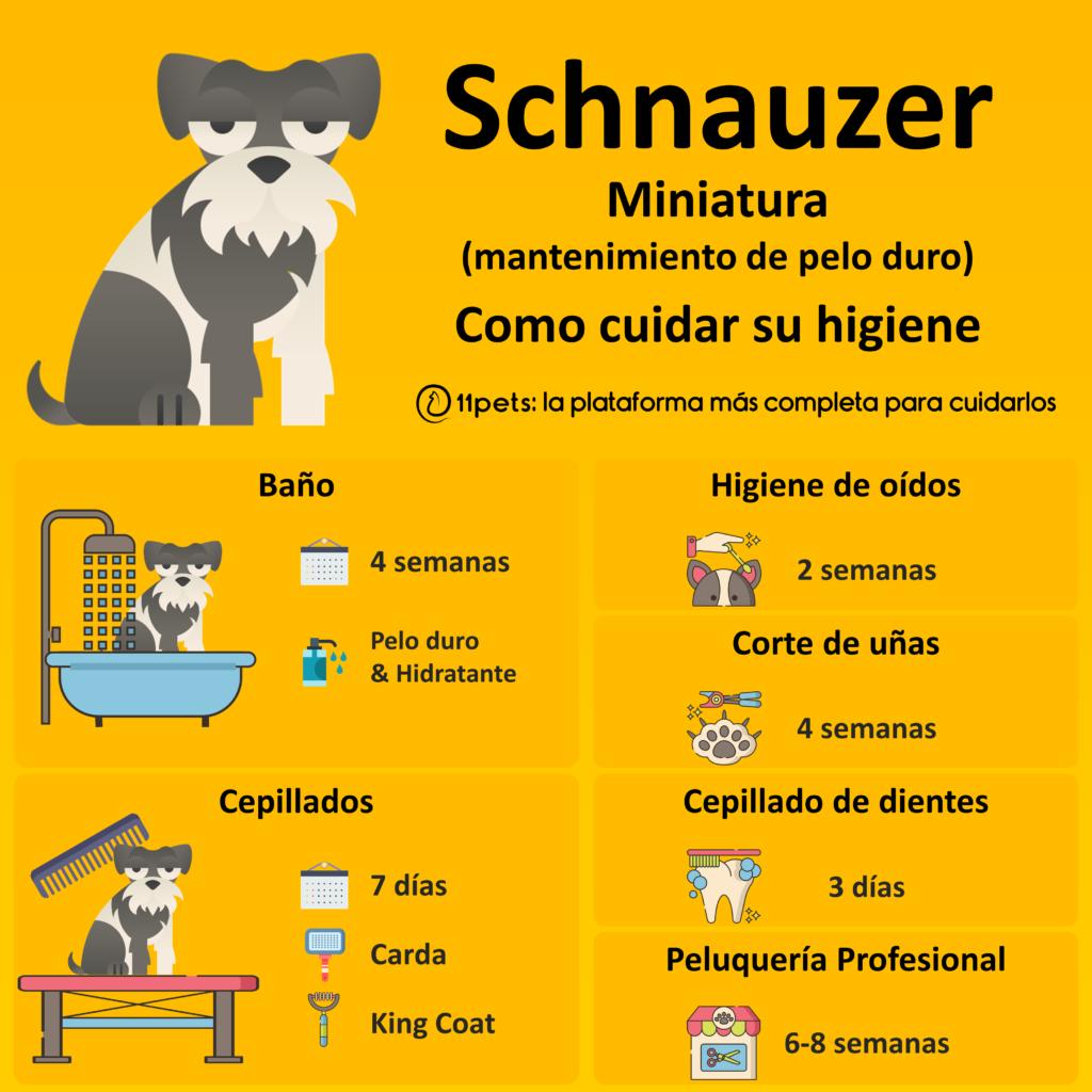 Guía de cuidados para la higiene de tu Schnauzer Miniatura
