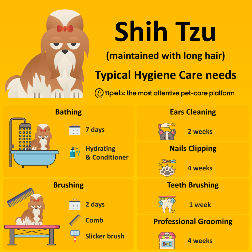 Hygiene Care Guide for Shih Tzus