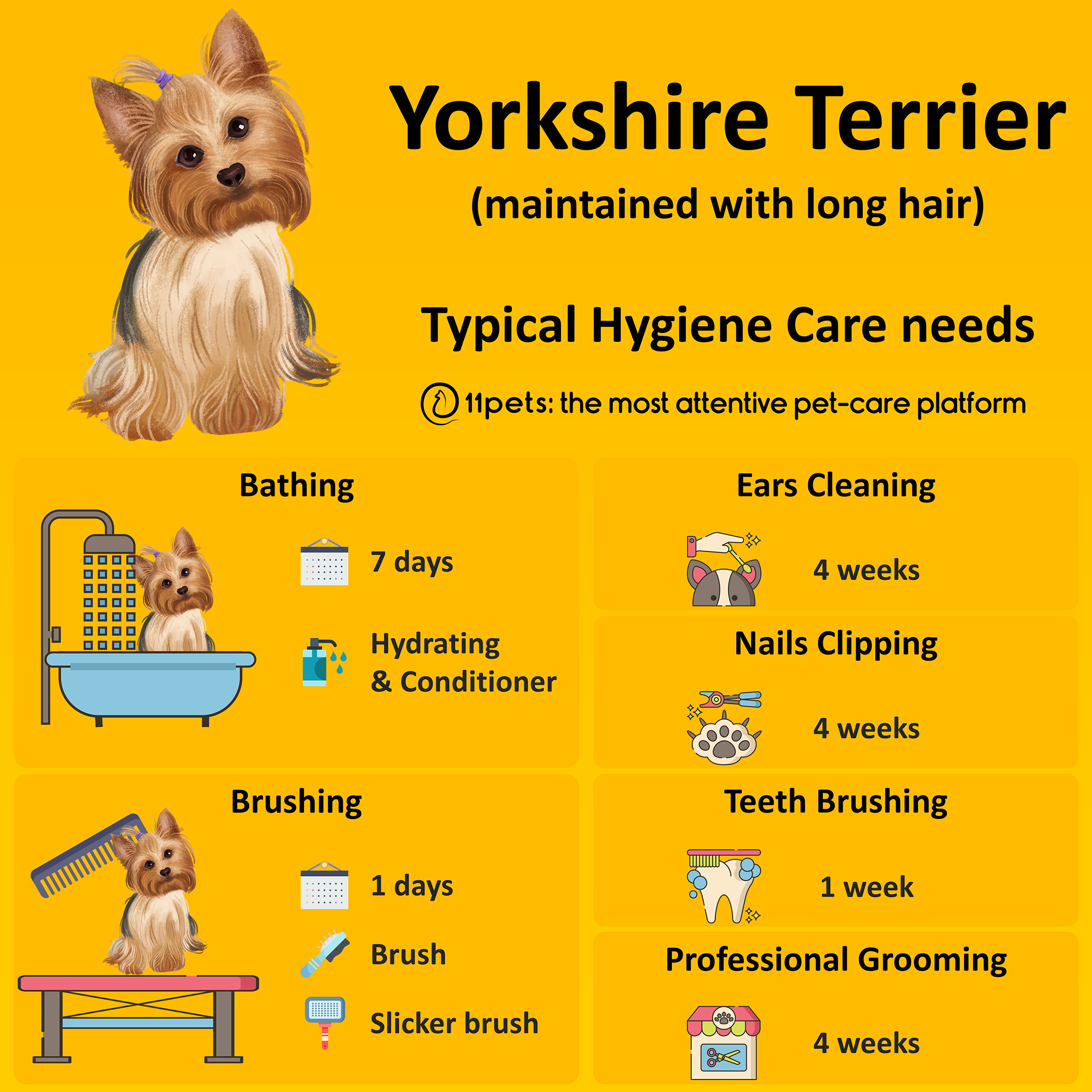 Yorkshire Terrier How To Care For Its Hygiene Needs 11pets