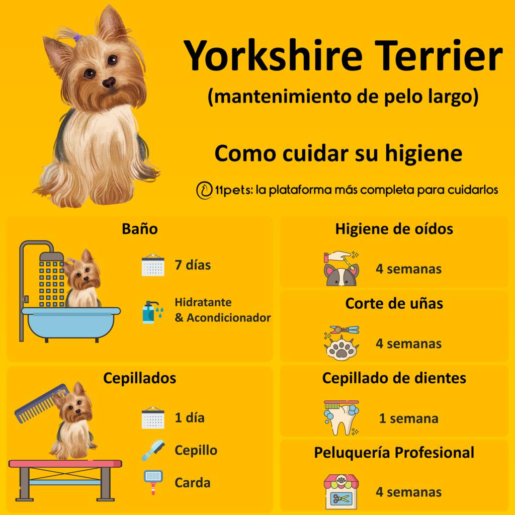 Guía de cuidados para la higiene de tu Yorkshire Terrier