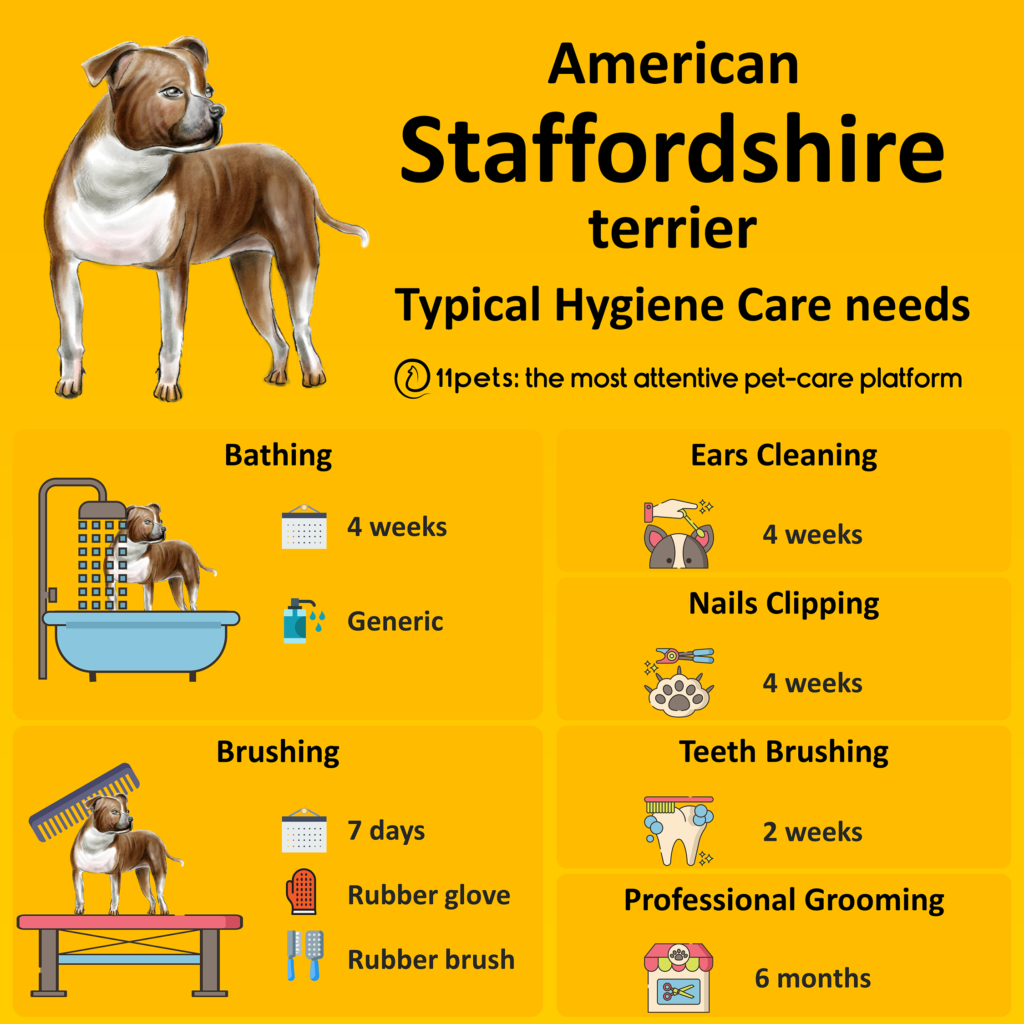 Hygiene care guide for your American Staffordshire Terrier