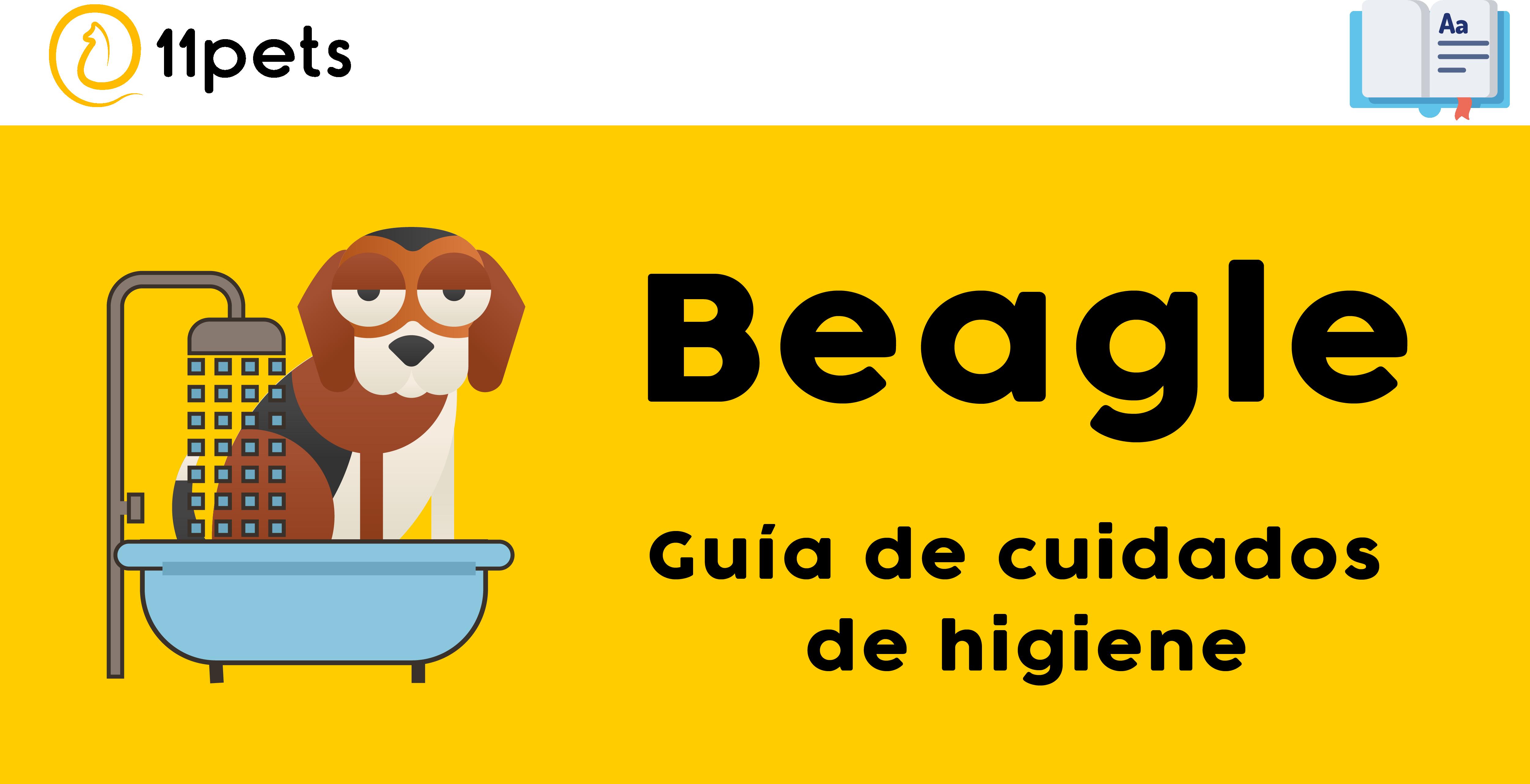 Guía de cuidados para la higiene de tu Beagle