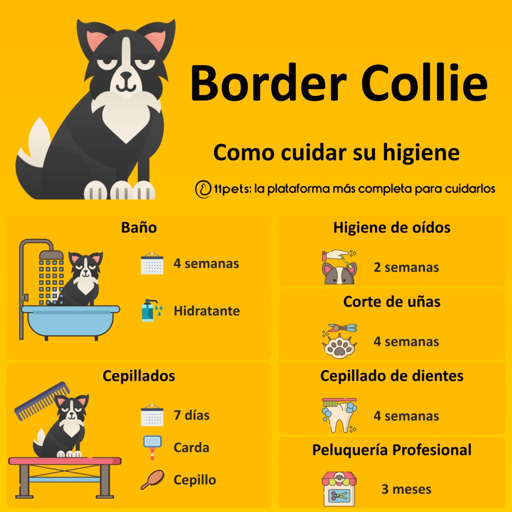 Guía de cuidados para la higiene de tu Border Collie