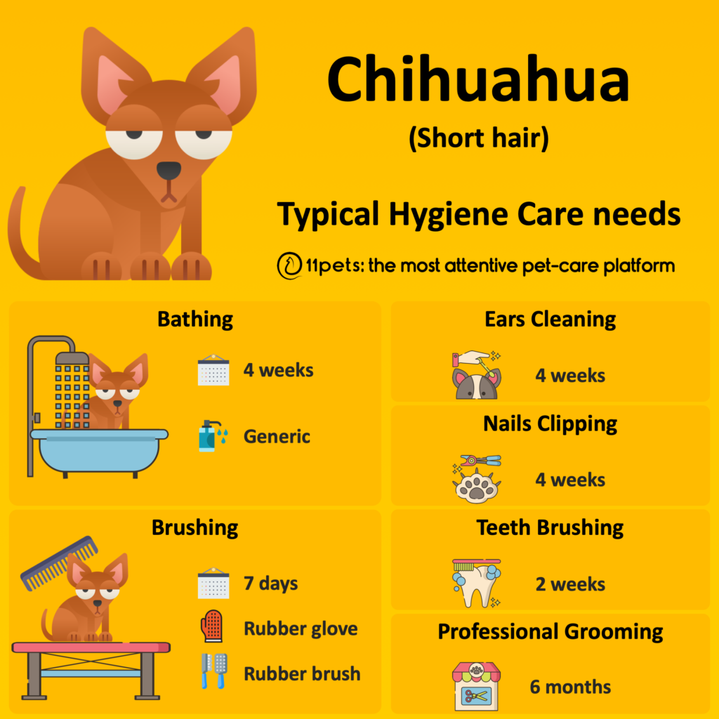 Hygiene Care Guide for Chihuahua dogs