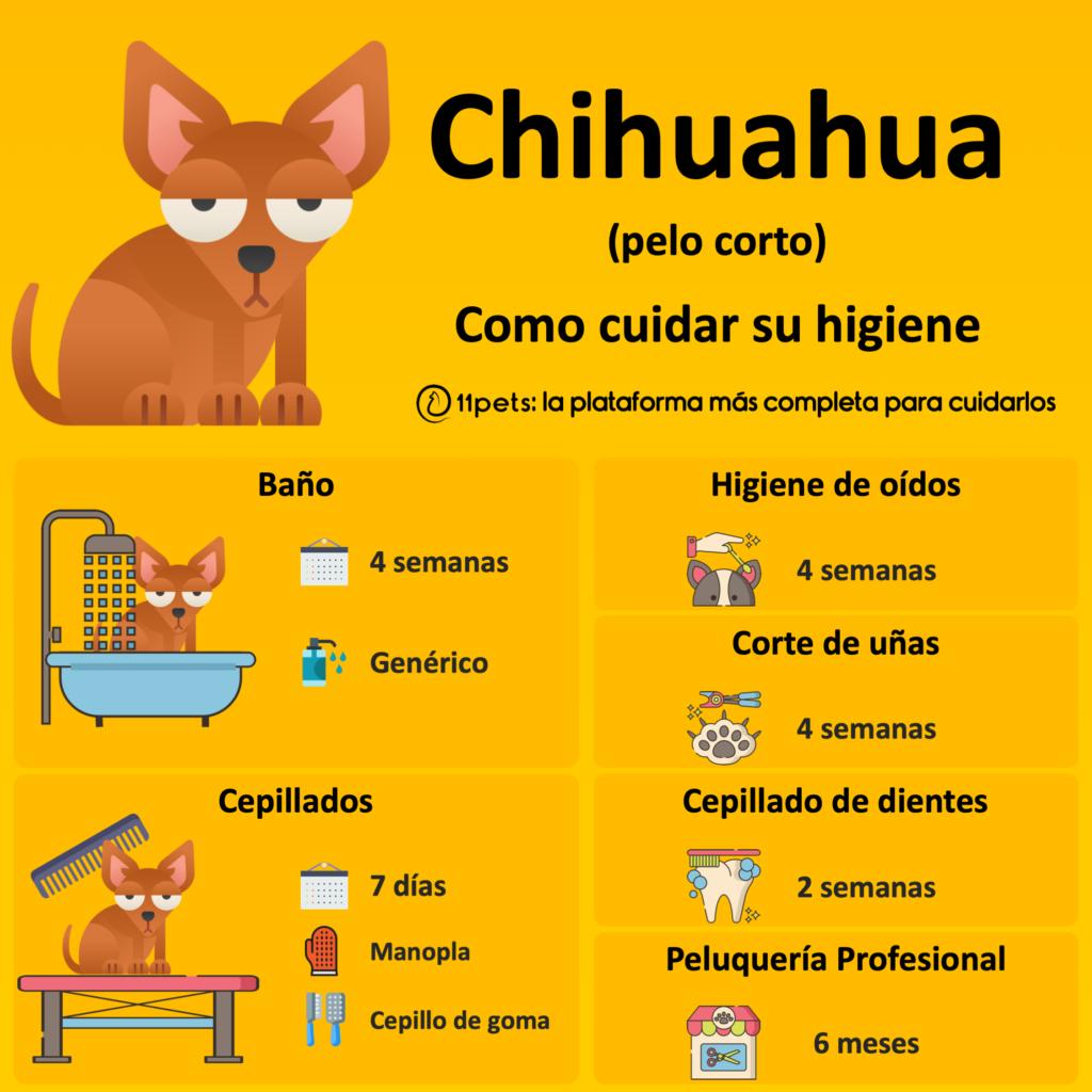 Guía de cuidados para la higiene de tu Chihuahua