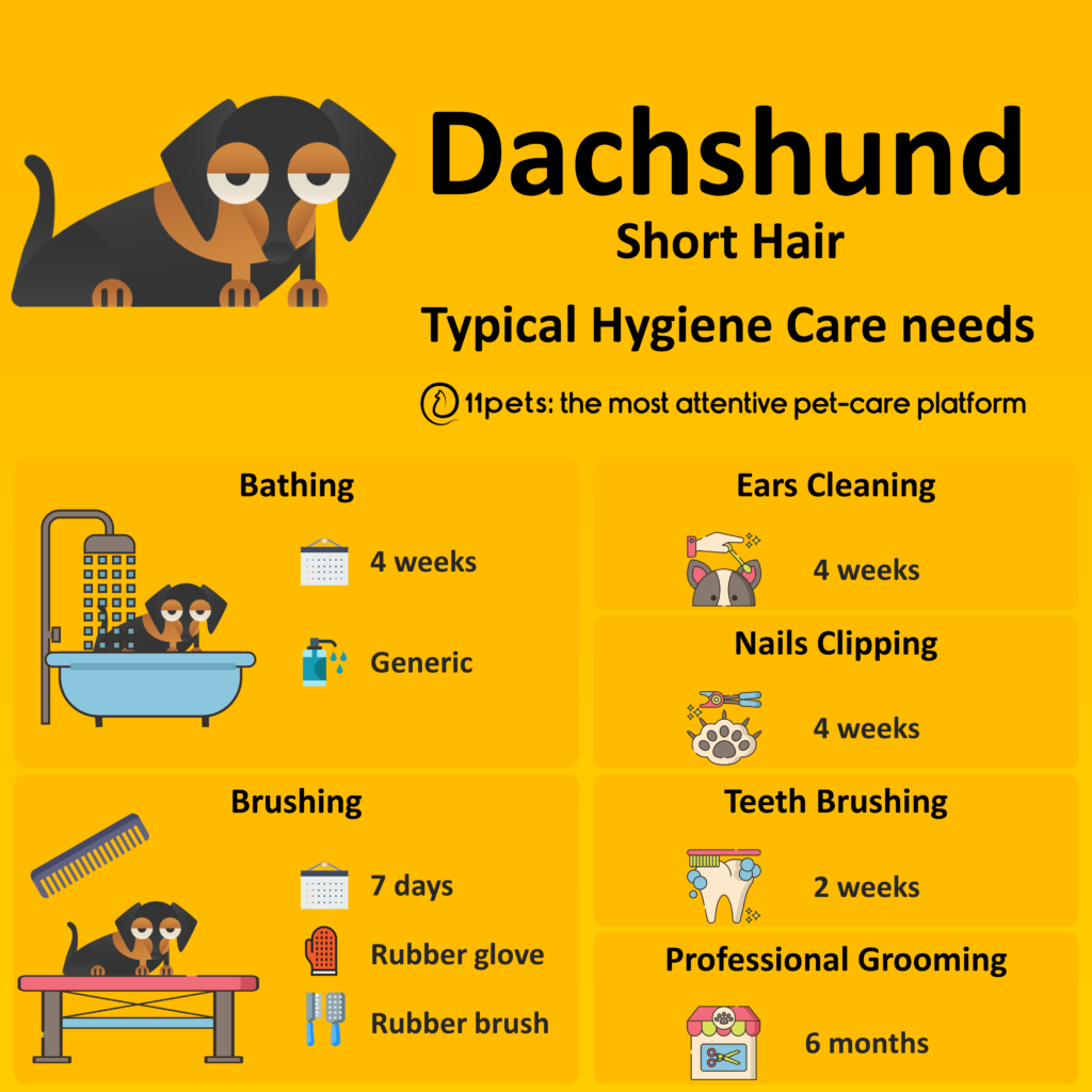 Hygiene Care Guide for Dachshunds