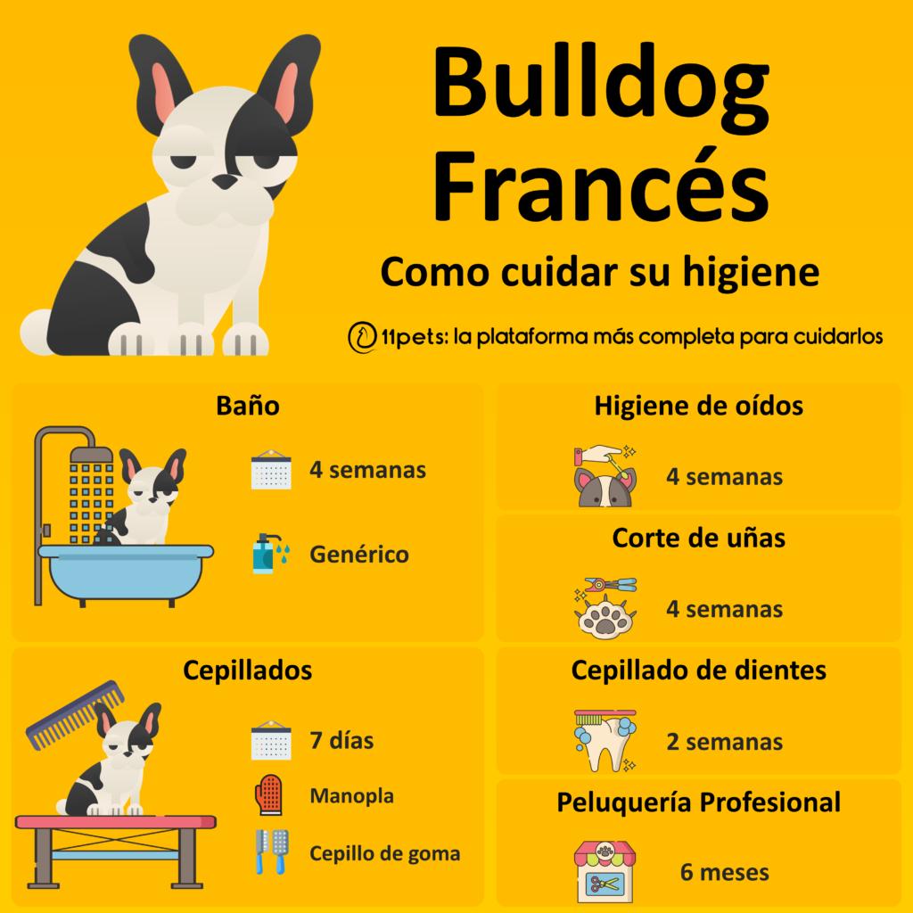Guía de cuidados para la higiene de tu Bulldog Francés