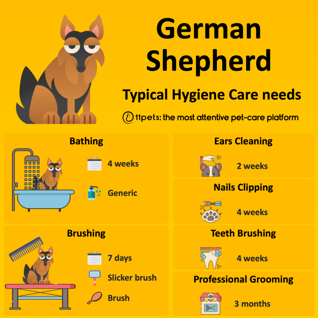 Hygiene Care Guide for German Shepherd dogs