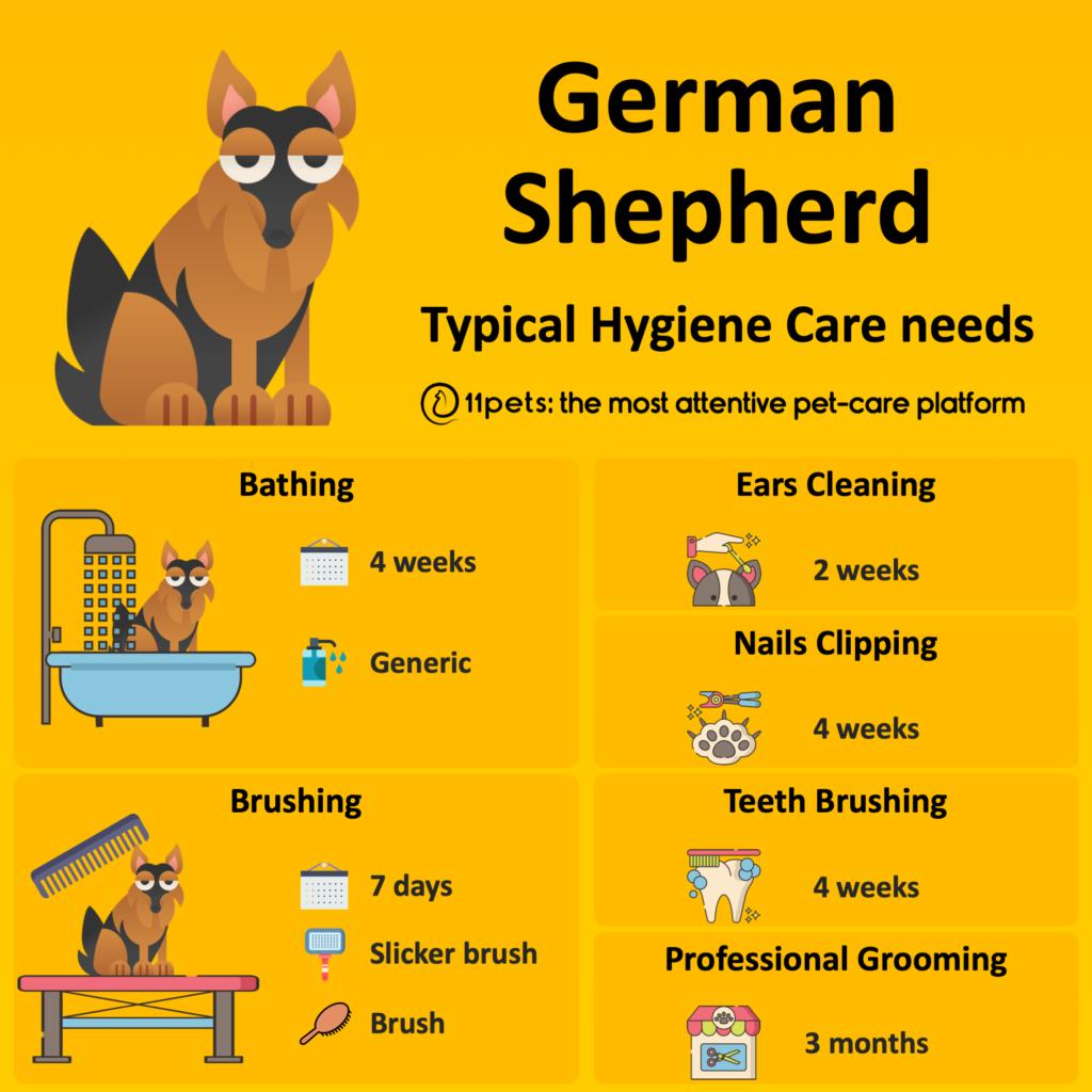 Hygiene Care Guide for German Shepherd dogs