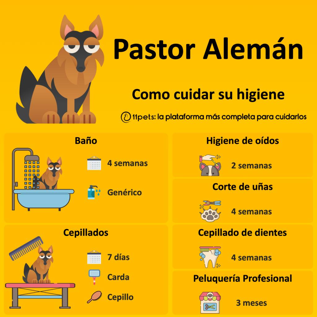 Guía de cuidados para la higiene de tu Pastor Alemán
