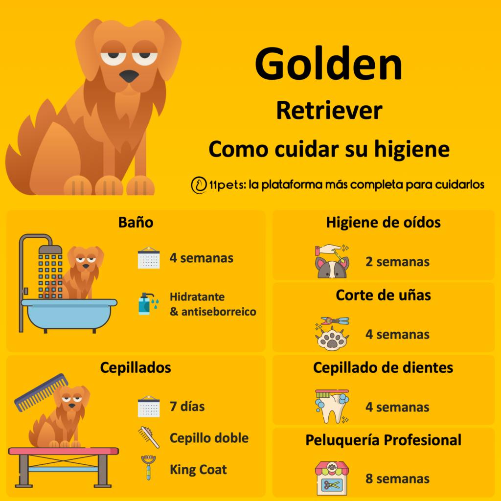 Guía de cuidados para la higiene de tu Golden Retriever