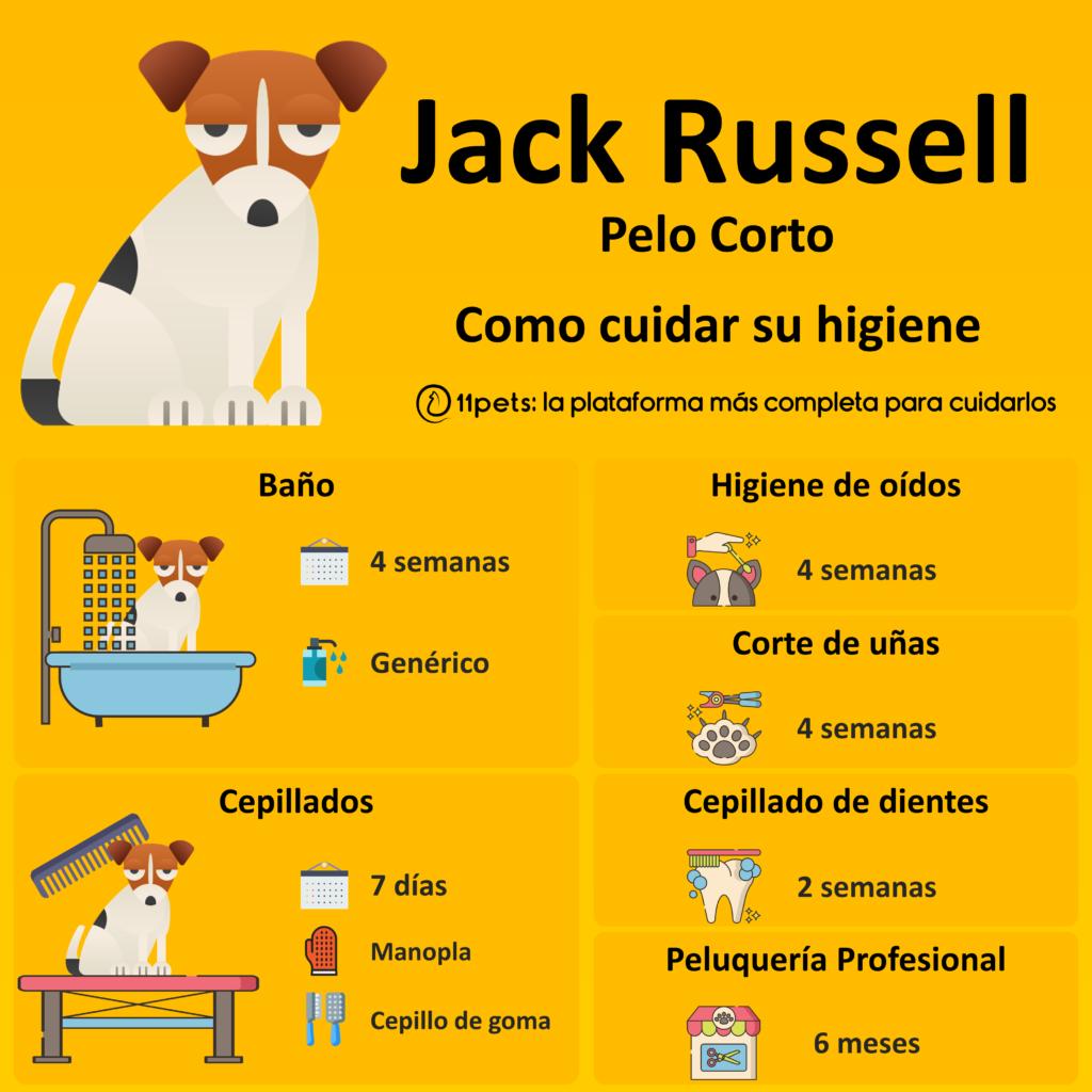 Guía de cuidados para la higiene de tu Jack Russell