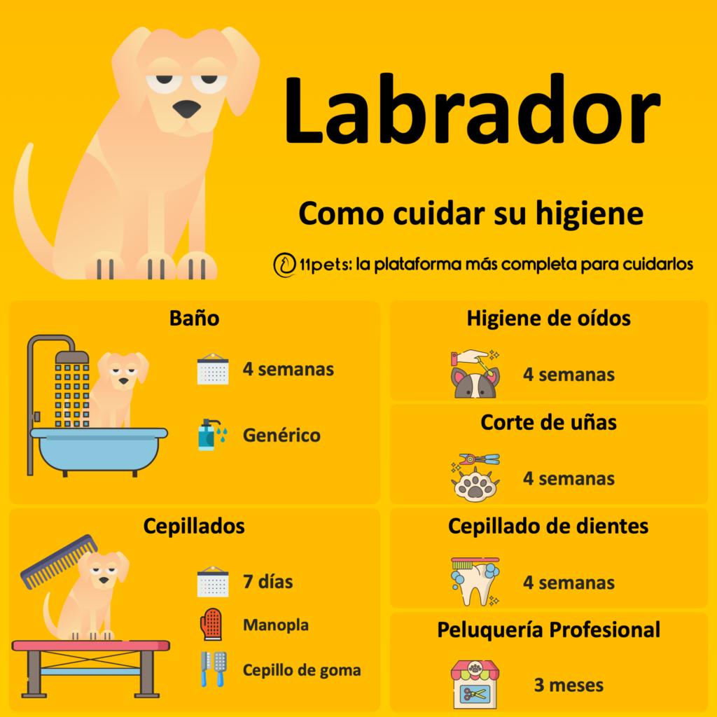 Guía de cuidados para la higiene de tu Labrador