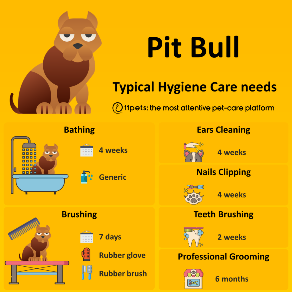 Hygiene Care Guide for Pit Bull