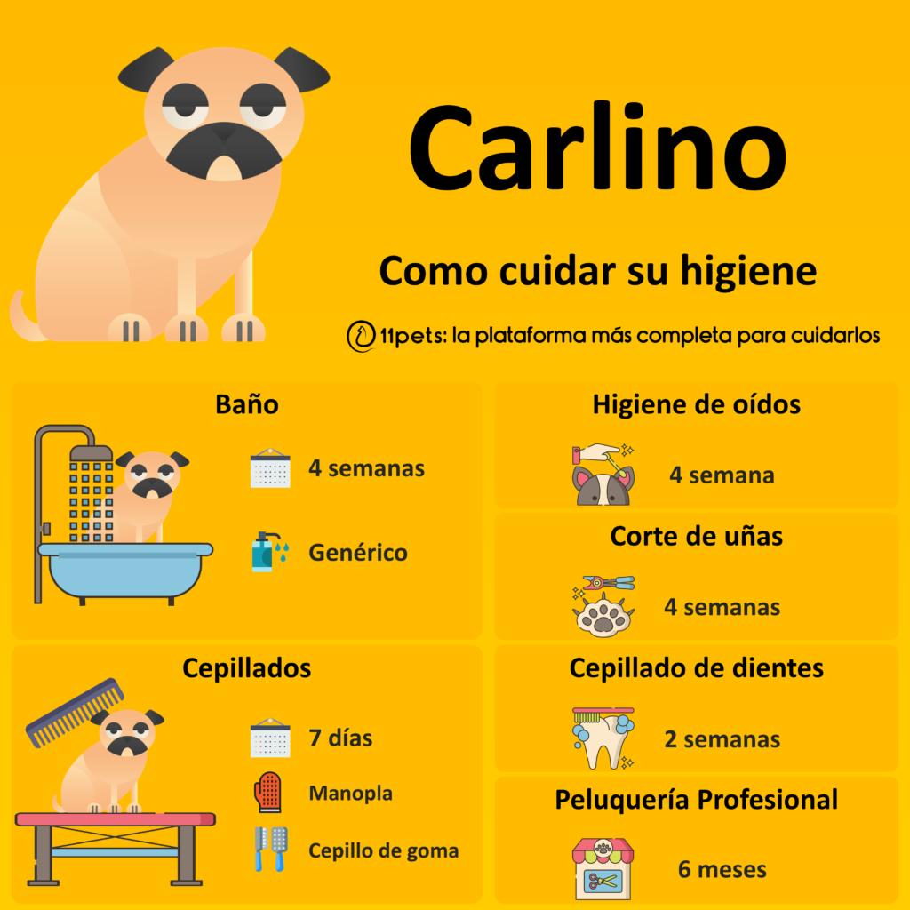 Guía de cuidados para la higiene de tu Carlino