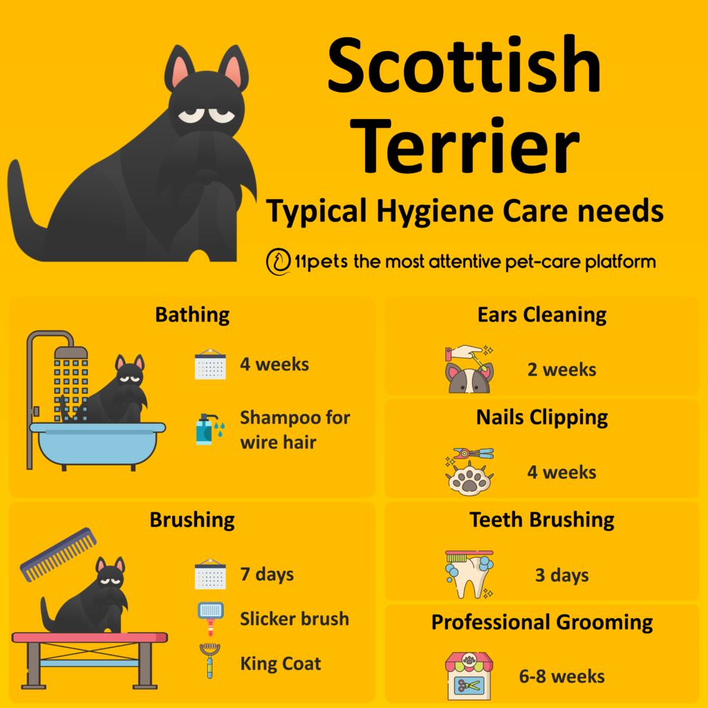 Hygiene Care Guide for Scottish Terrier