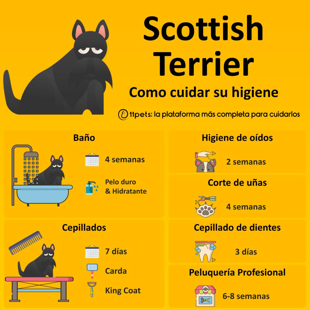 Guía de cuidados para la higiene de tu Scottish Terrier