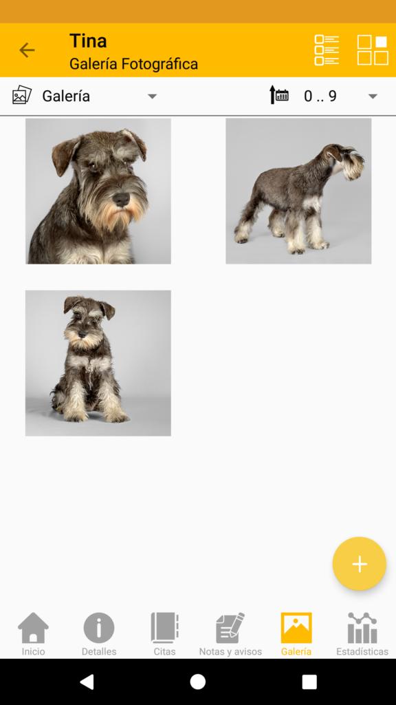 La información que puedes mantener para cada mascota – Galería