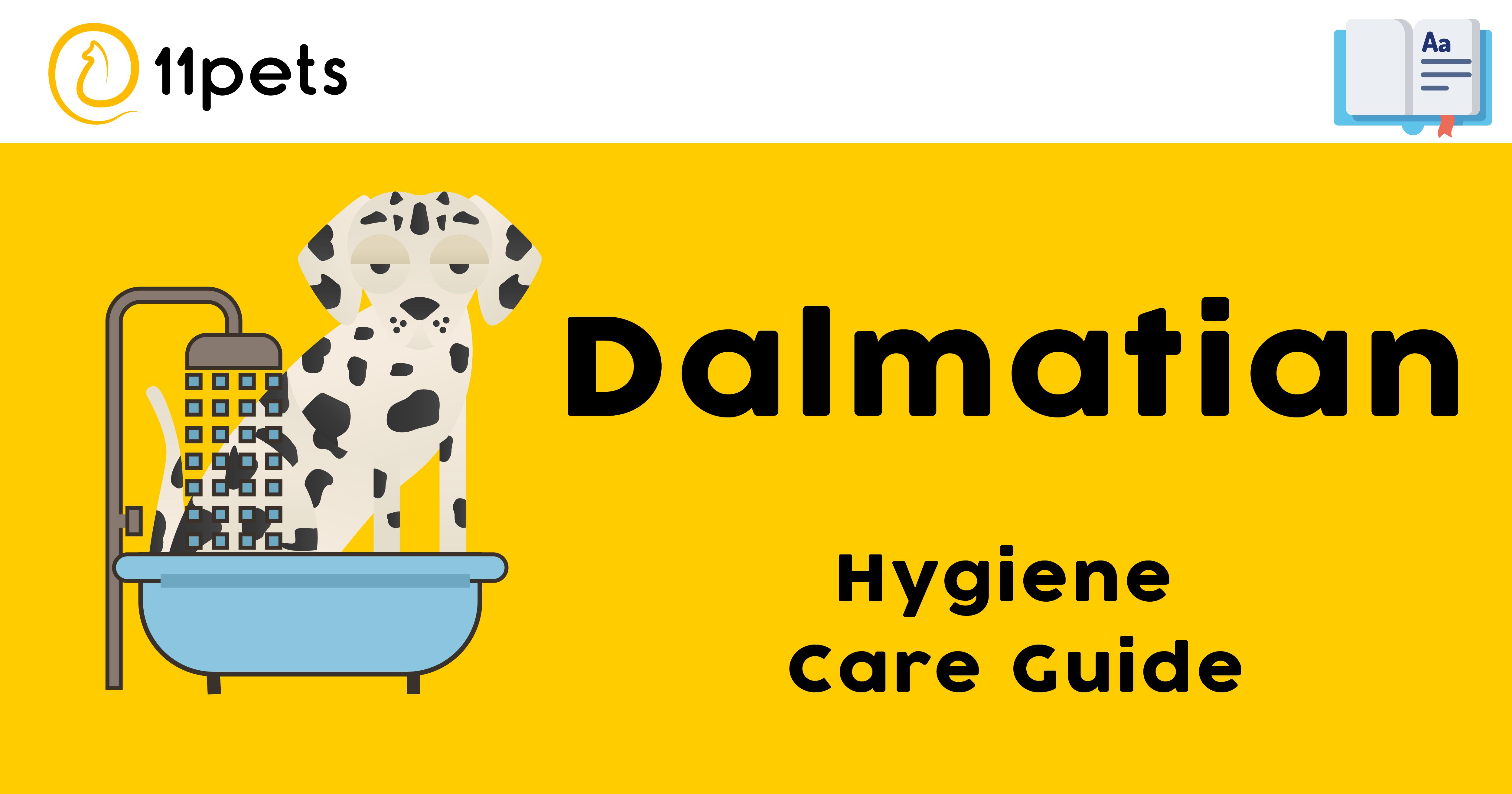 Hygiene Care Guide for Dalmatian