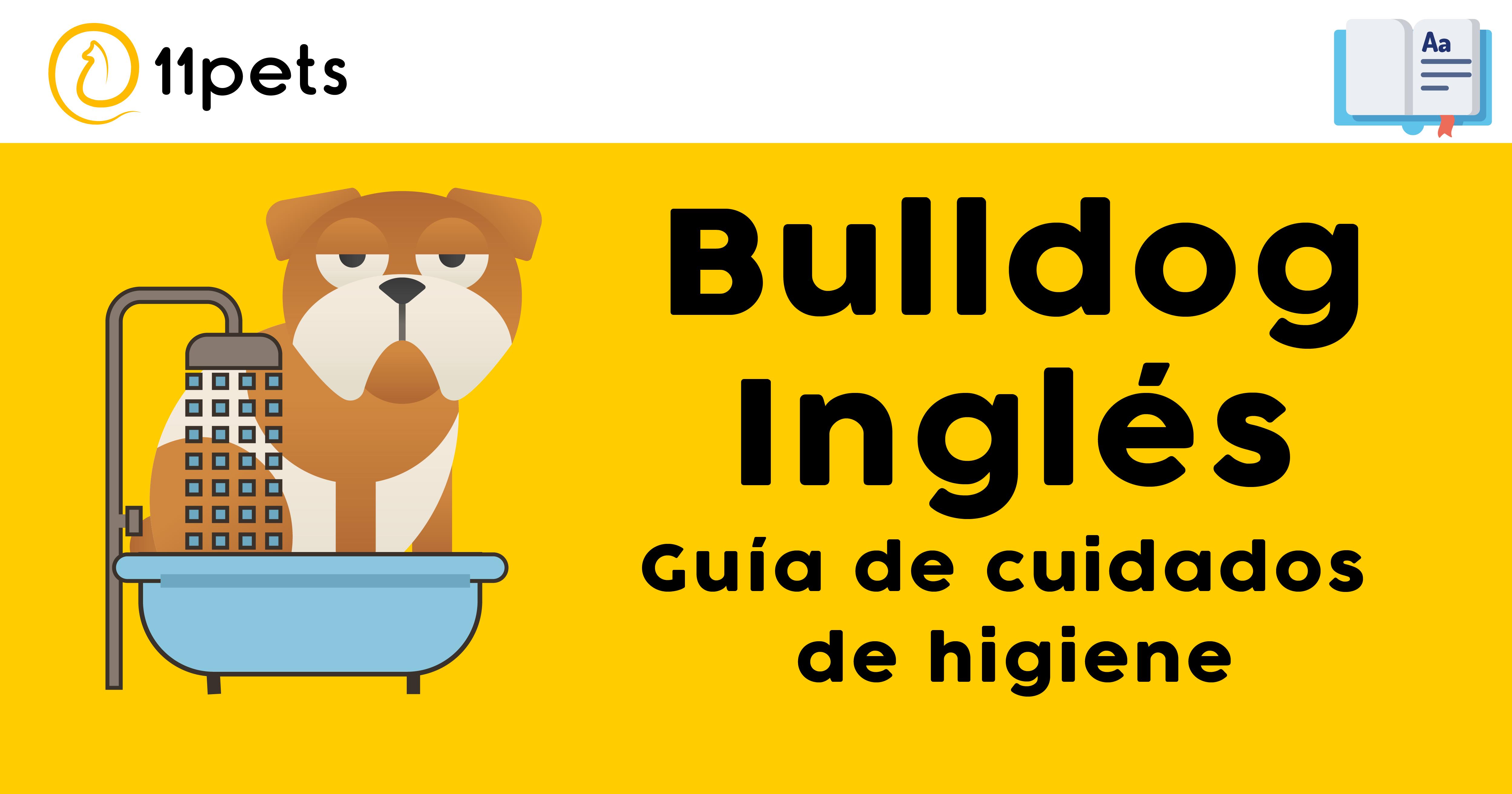 Guía de cuidados para la higiene de tu Bulldog Inglés