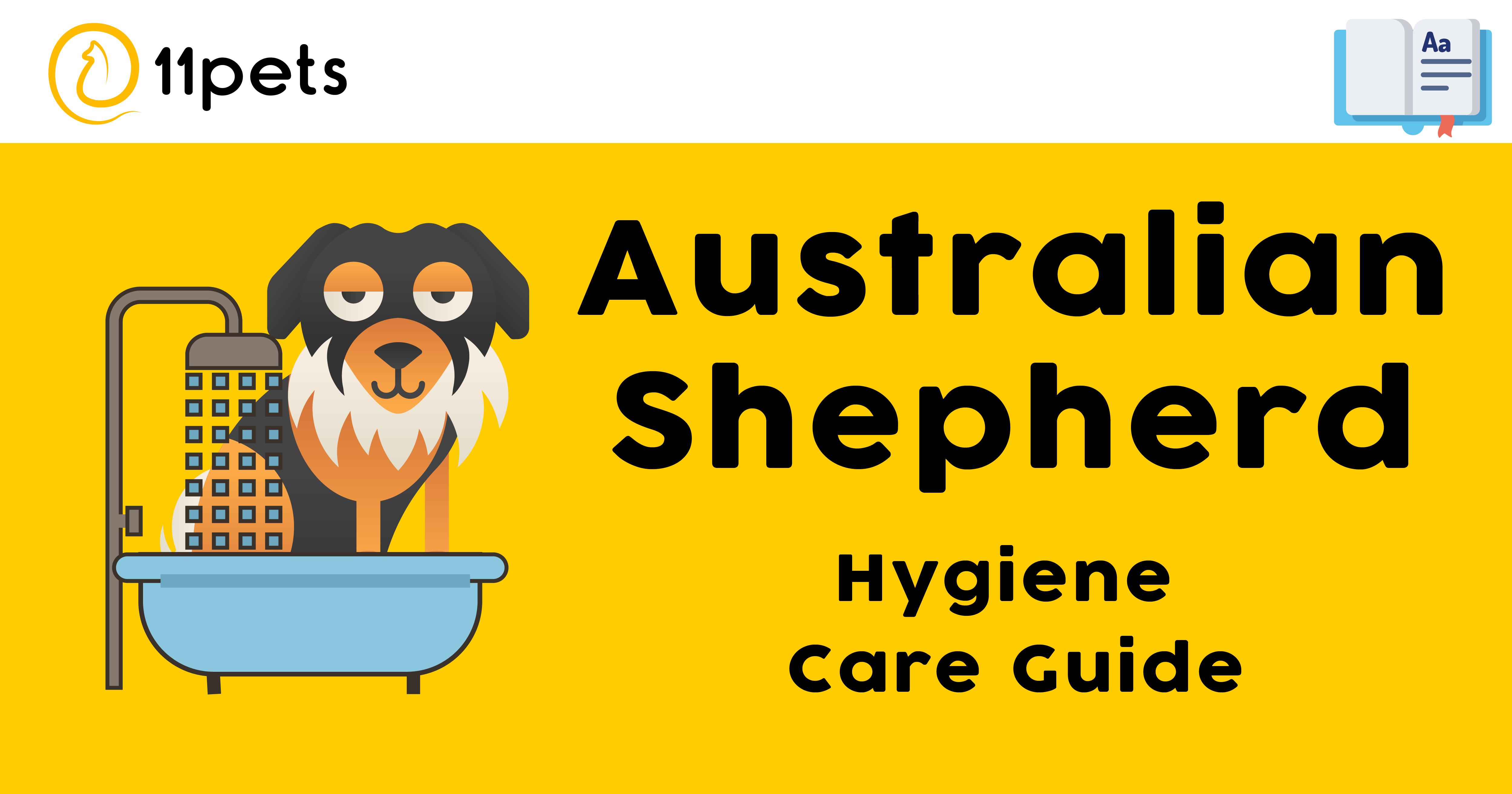 Hygiene Care Guide for Australian Shepherd
