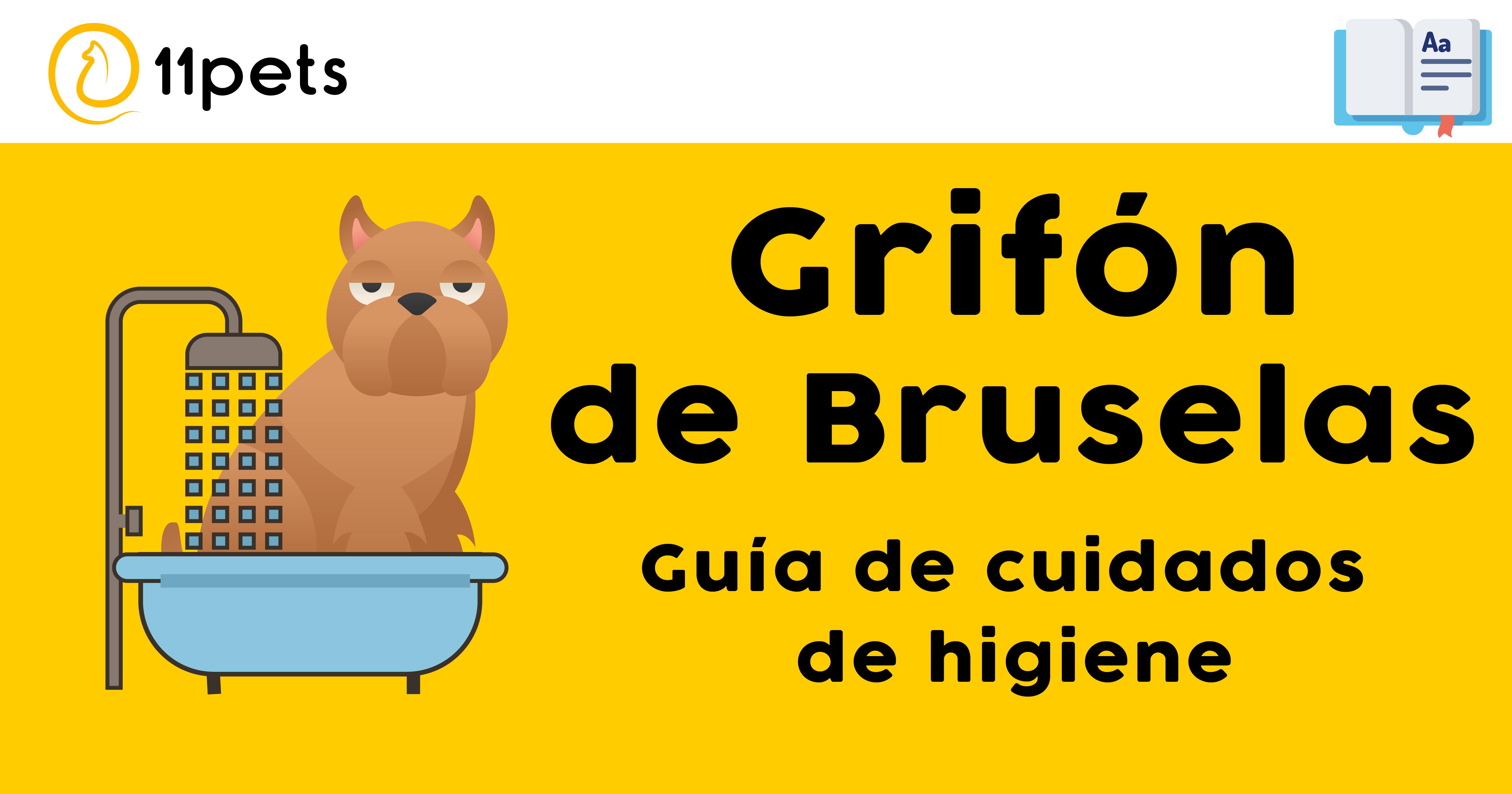 Guía de cuidados para la higiene de tu Grifón de Bruselas