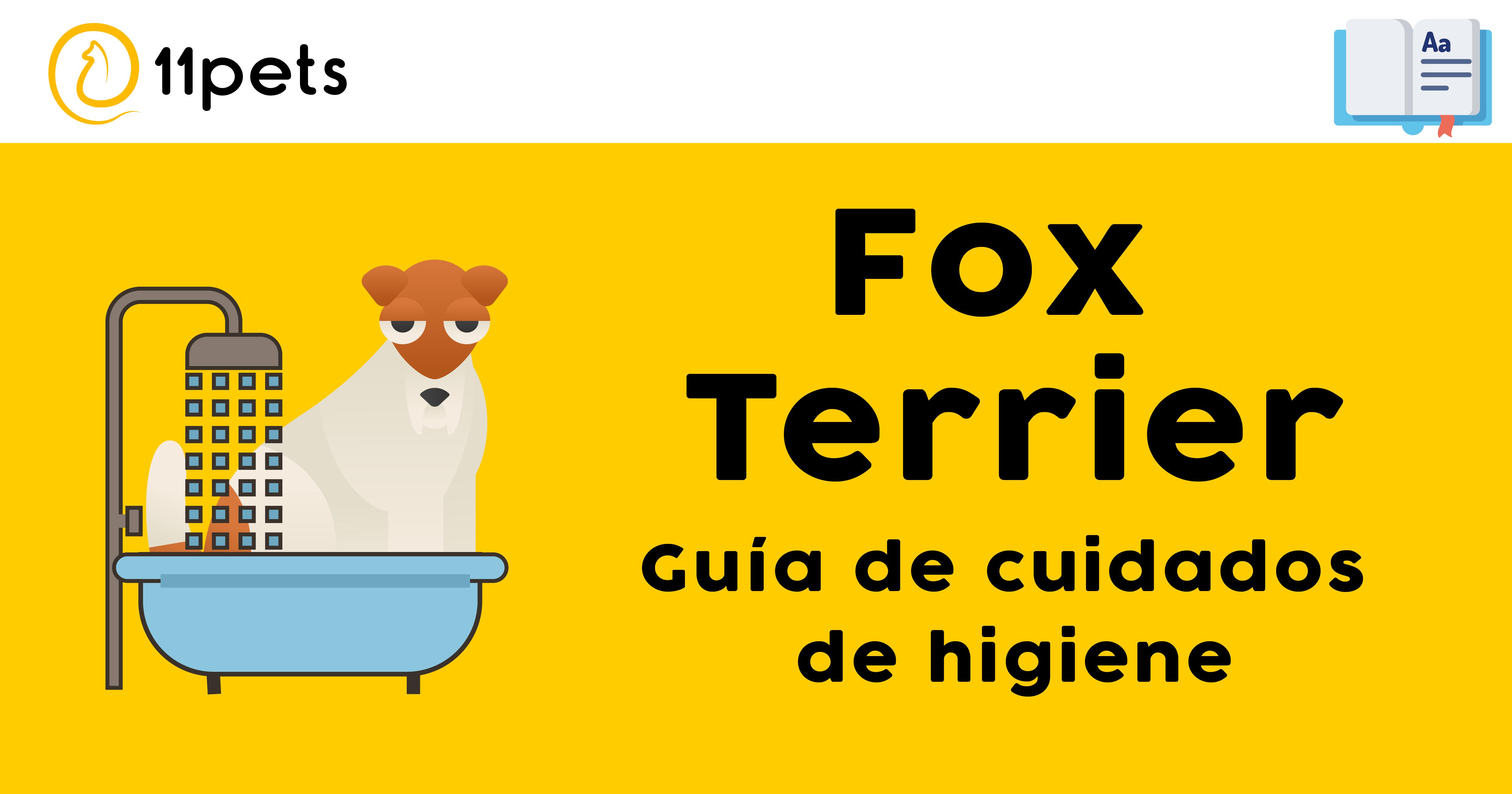 Guía de cuidados para la higiene de tu Fox Terrier
