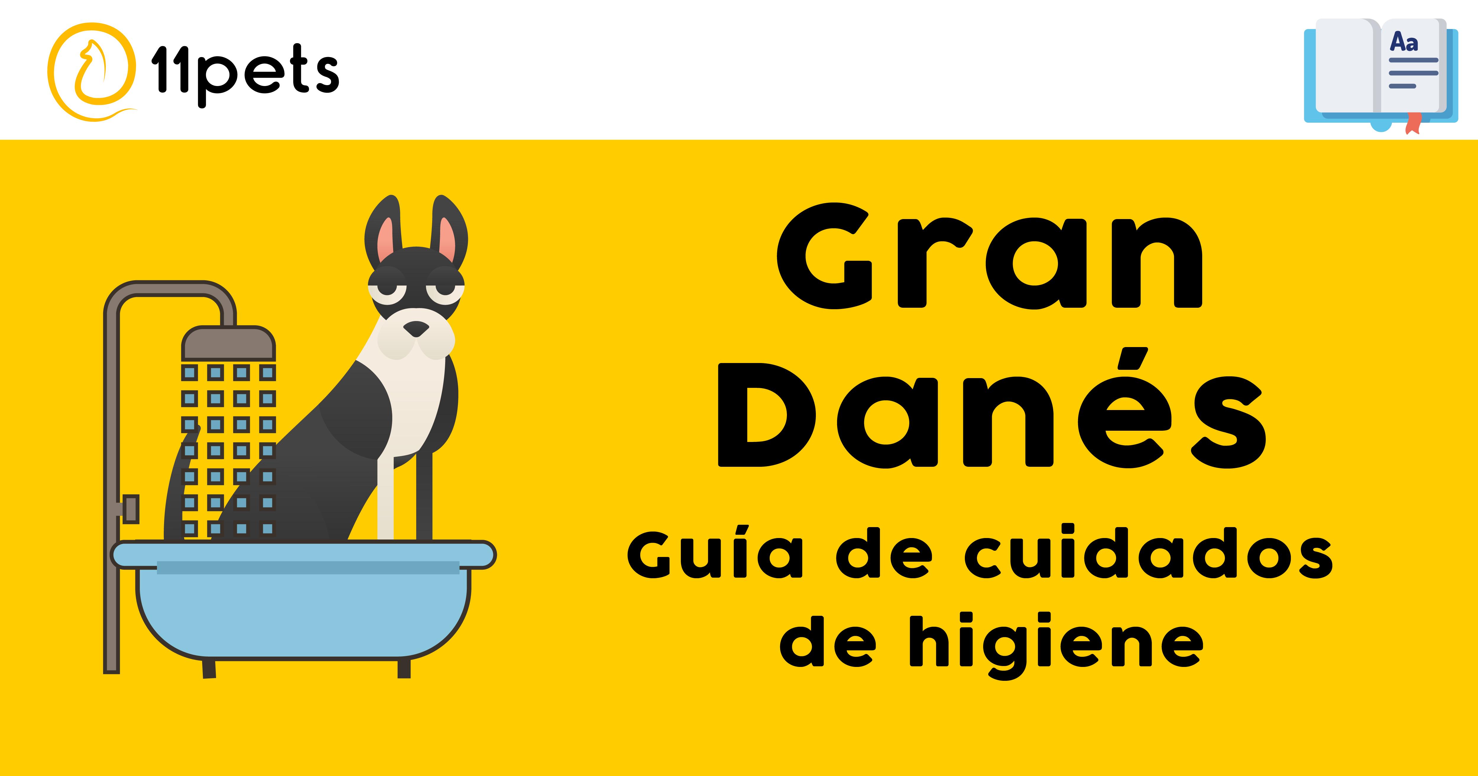 Guía de cuidados para la higiene de tu Gran Danés