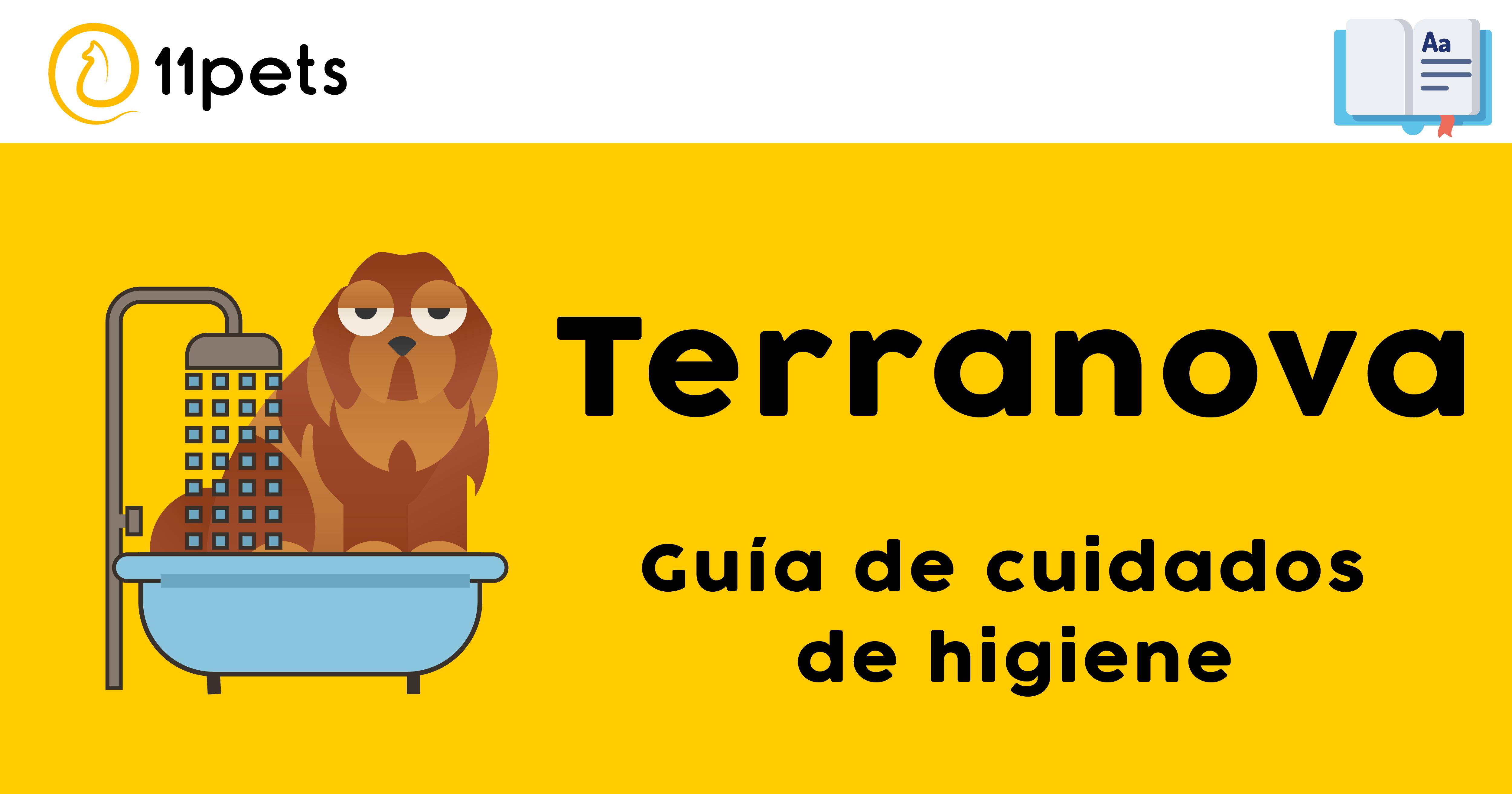 Guía de cuidados para la higiene de tu Terranova