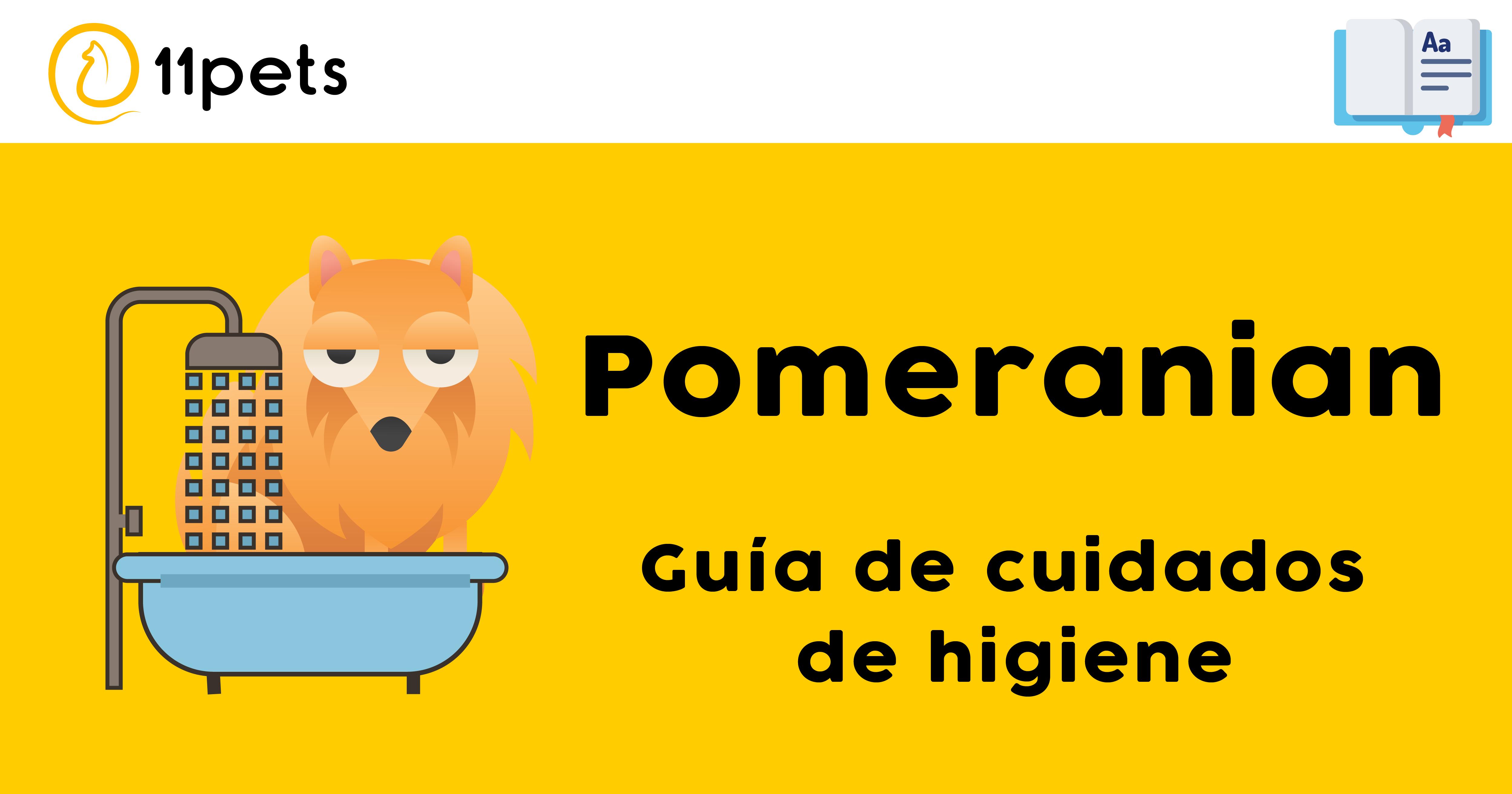 Guía de cuidados para la higiene de tu Pomeranian