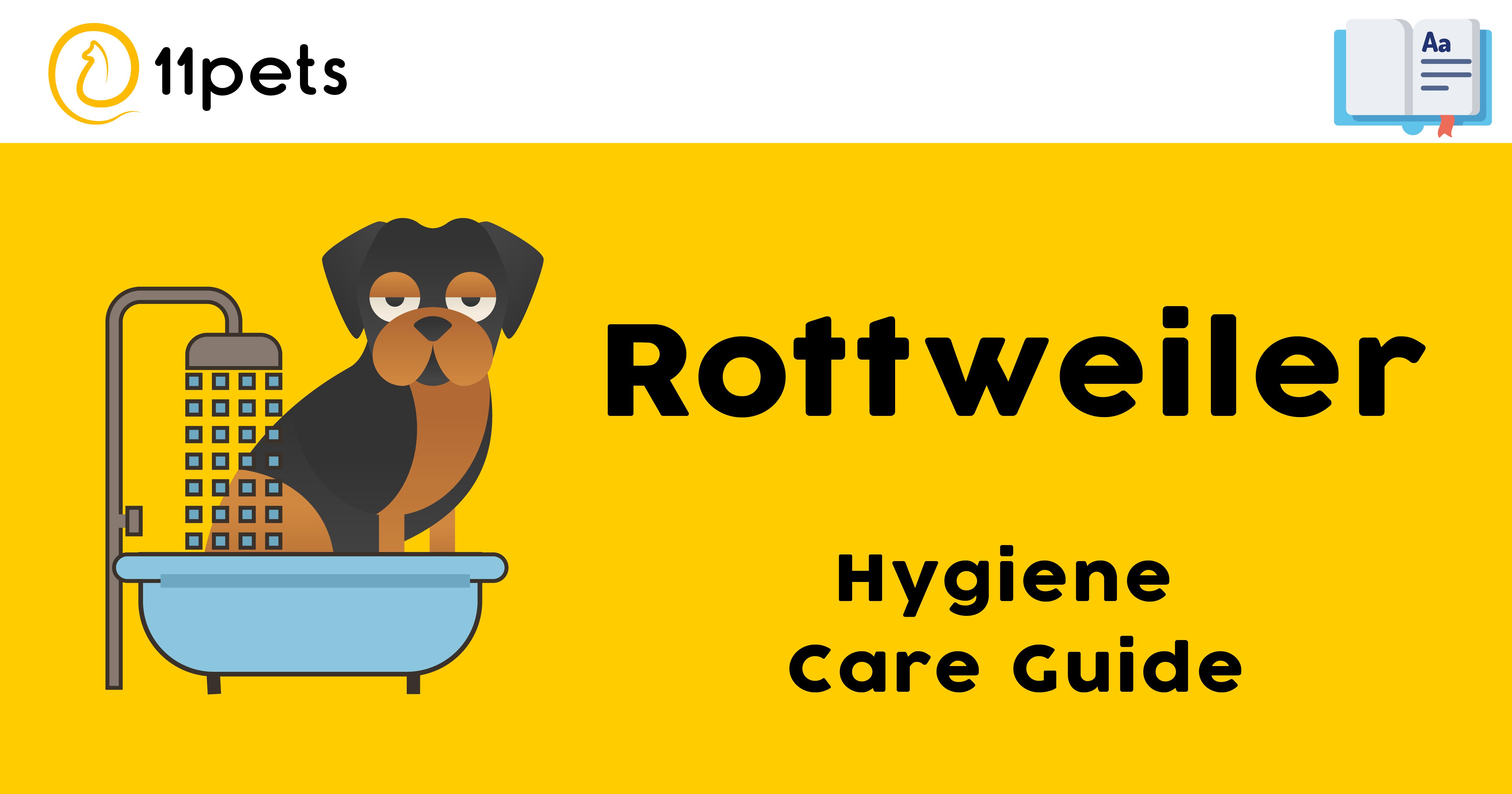 Hygiene Care Guide for Rottweiler