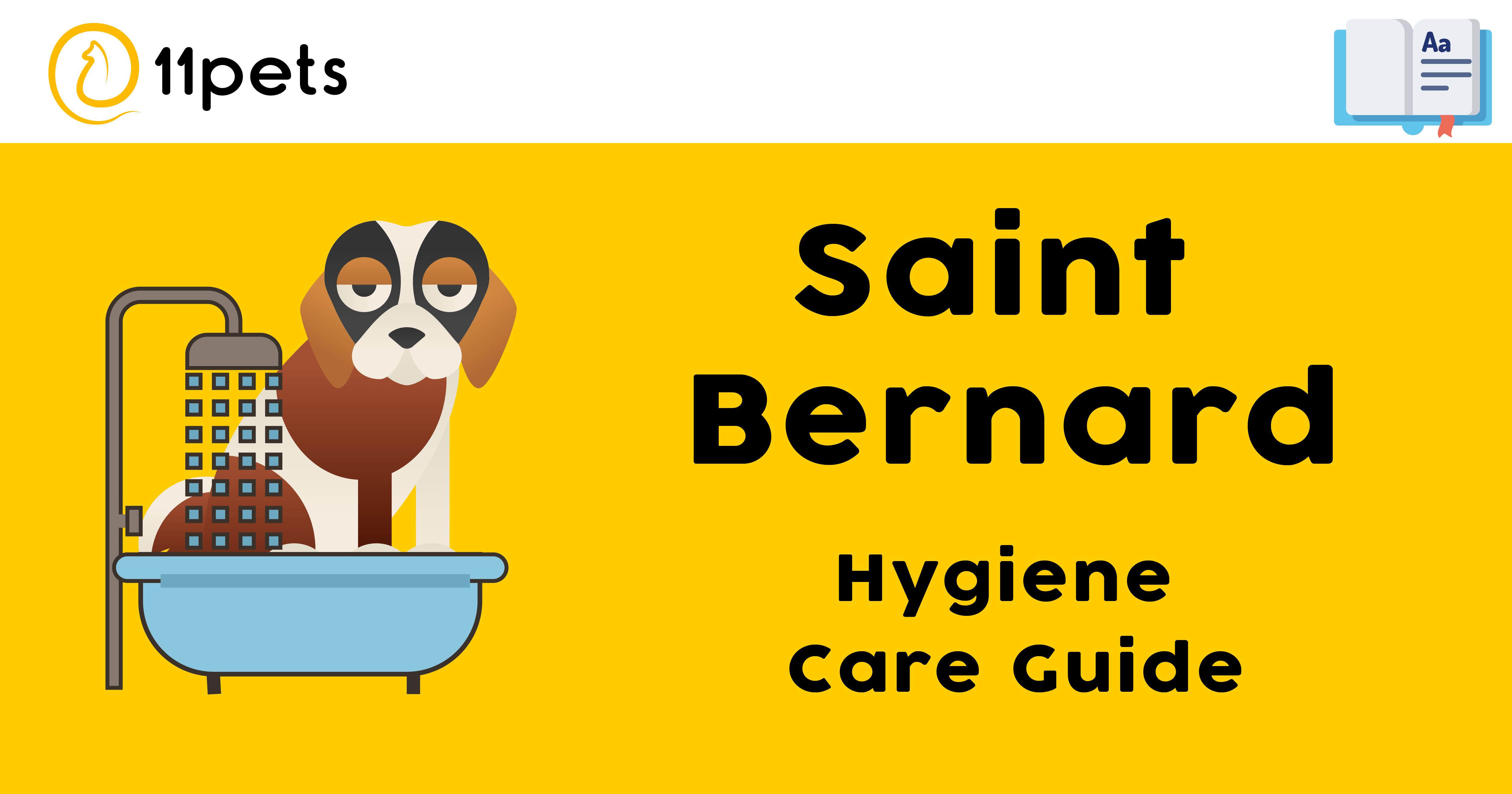 Hygiene Care Guide for Saint Bernard