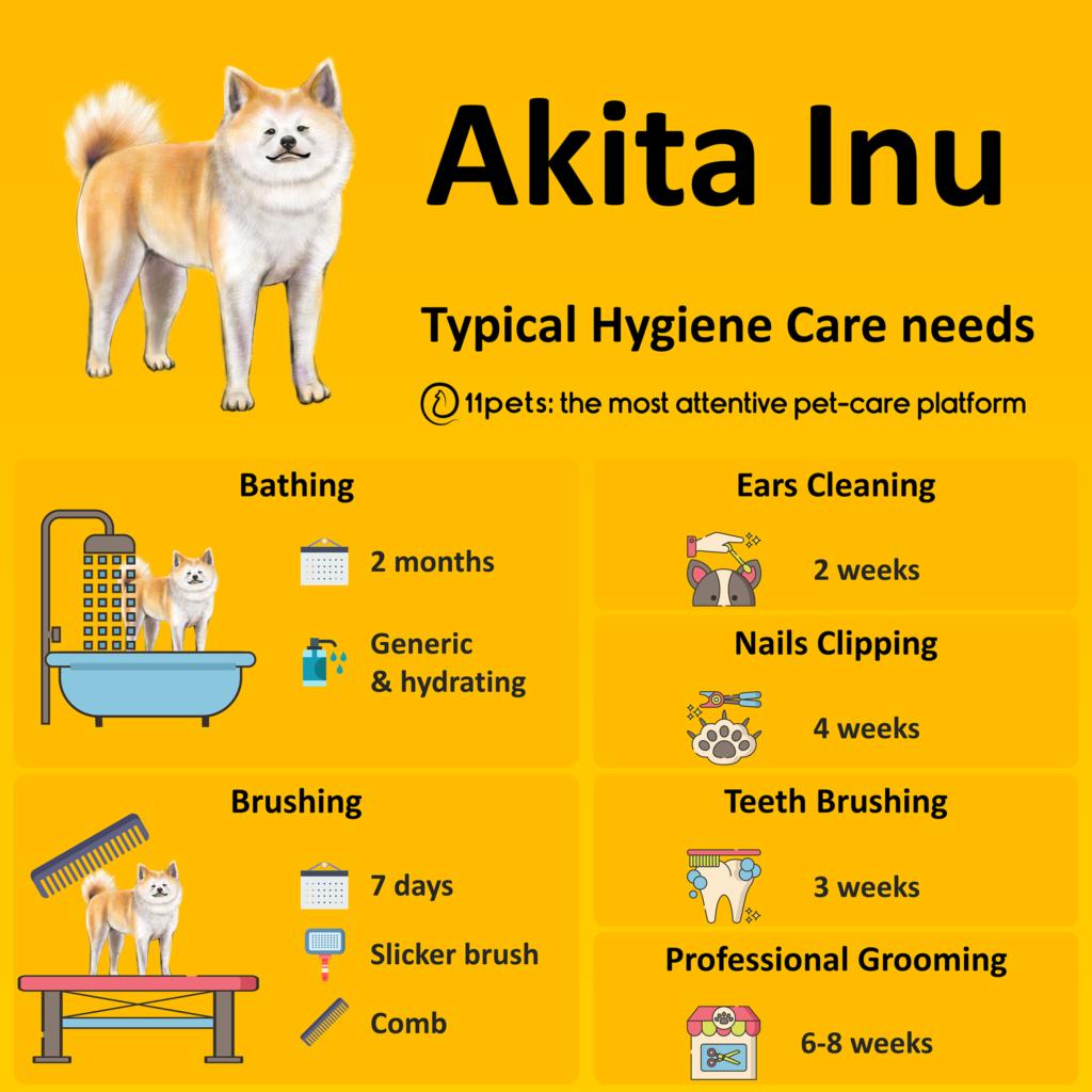 Hygiene Care Guide for Akita Inu