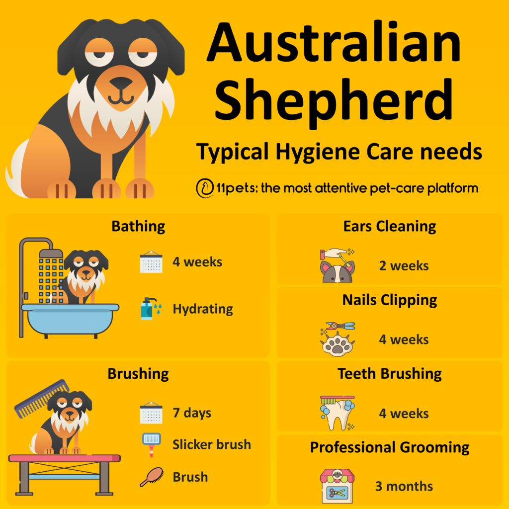 Hygiene Care Guide for Australian Shepherd