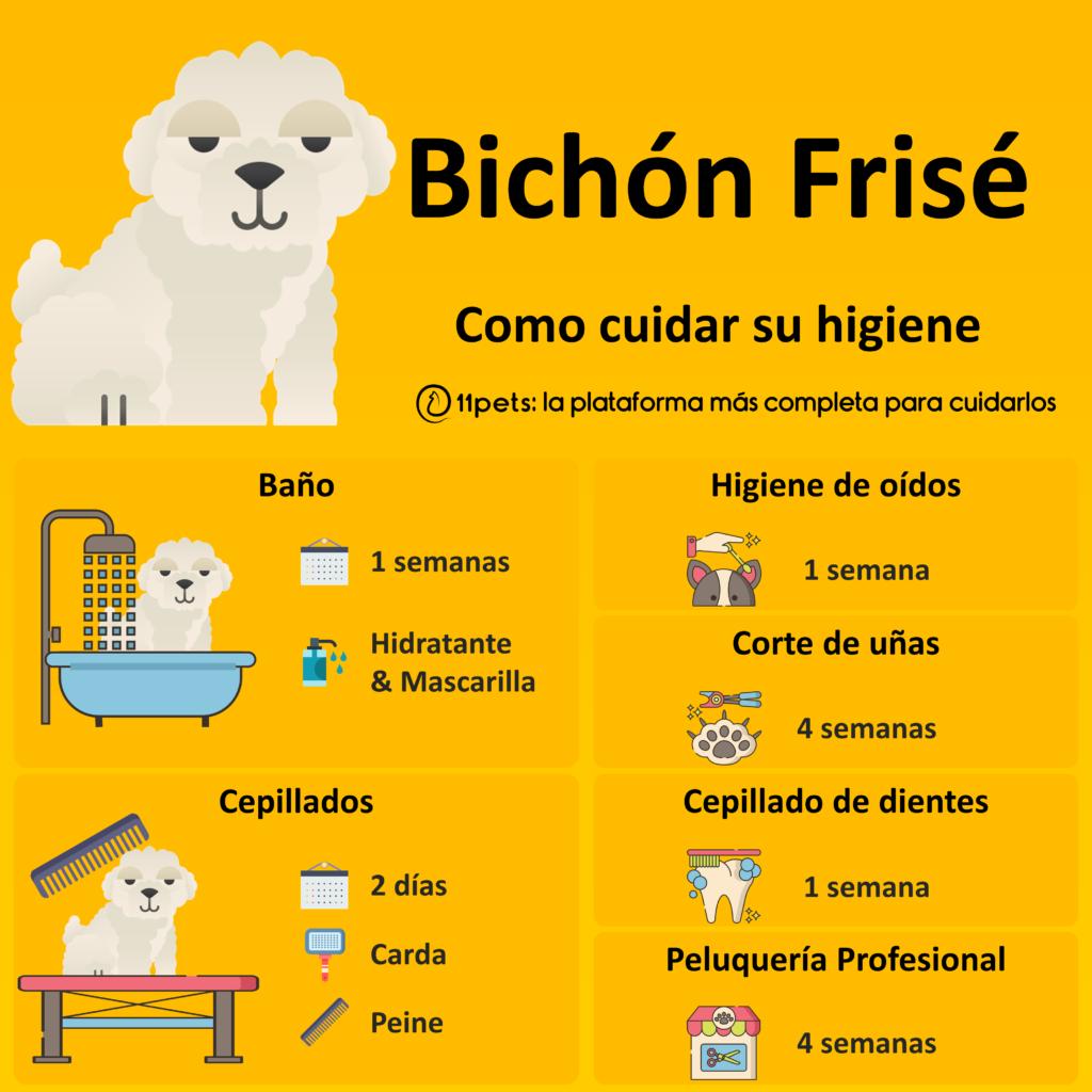 Guía de cuidados para la higiene de tu Bichón Frisé