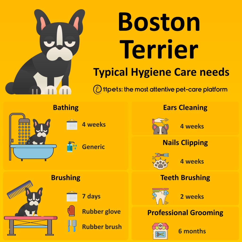 Hygiene Care Guide for Boston Terrier