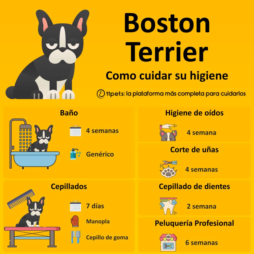 Guía de cuidados para la higiene de tu Boston Terrier