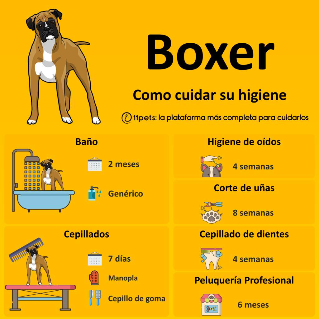 Guía de cuidados para la higiene de tu Boxer