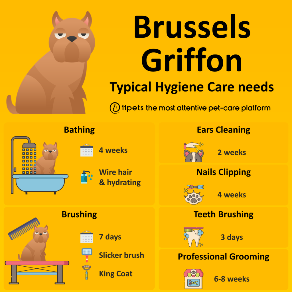 Hygiene Care Guide for Brussels Griffon