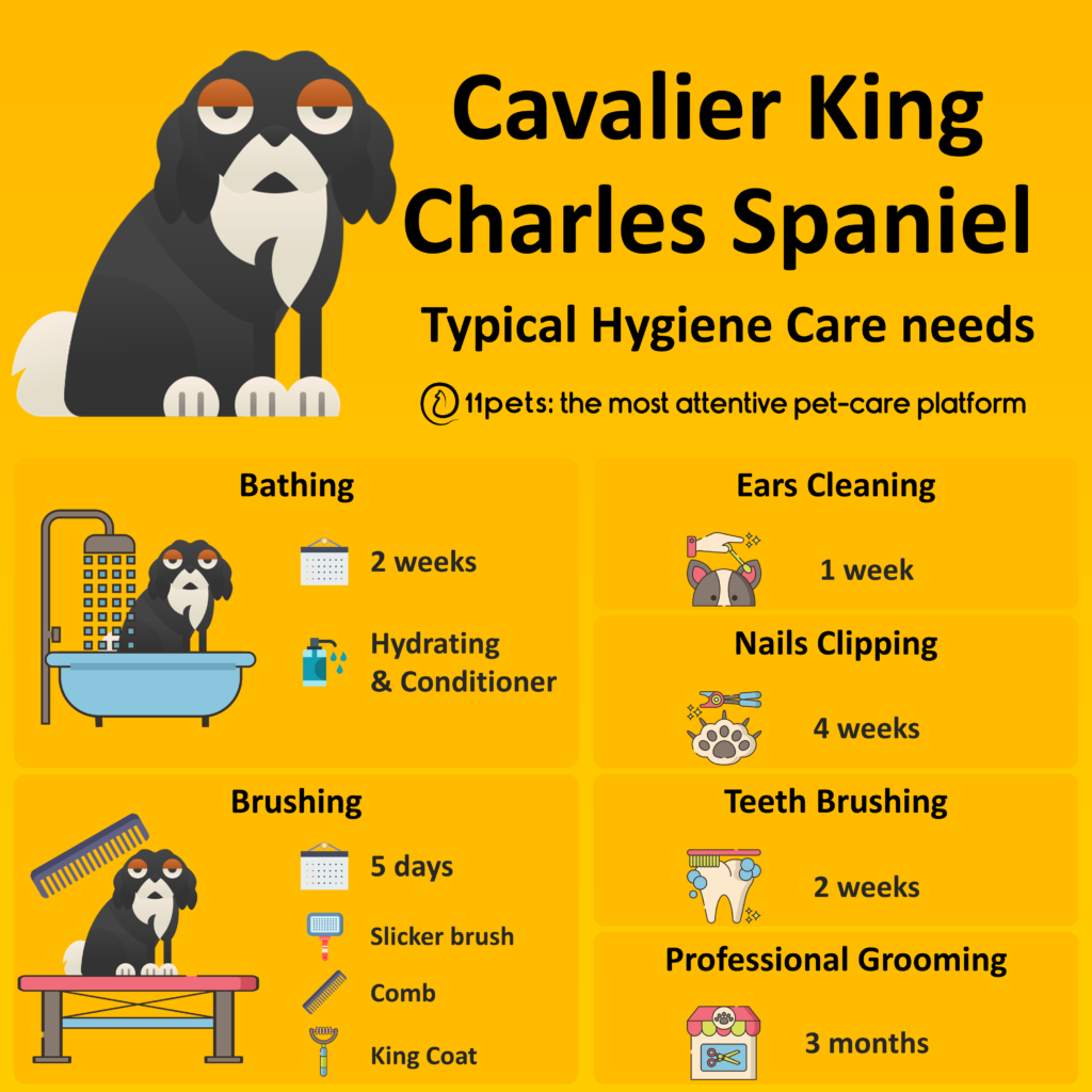 Hygiene Care Guide for Cavalier King Charles Spaniel