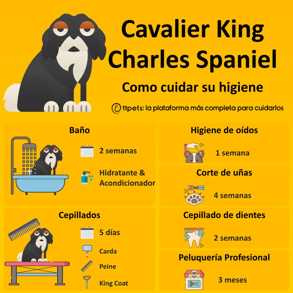 Guía de cuidados para la higiene de tu Cavalier King Charles Spaniel