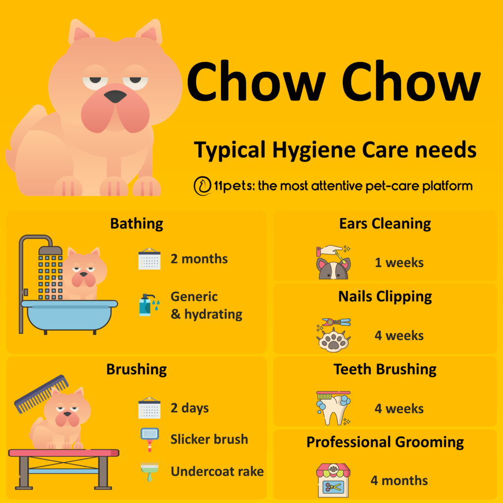 Hygiene Care Guide for Chow Chow