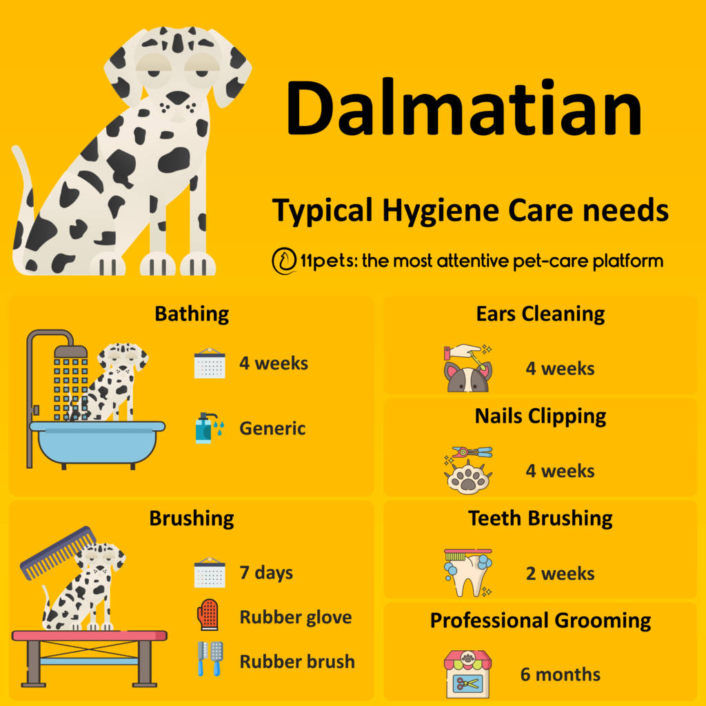 Hygiene Care Guide for Dalmatian